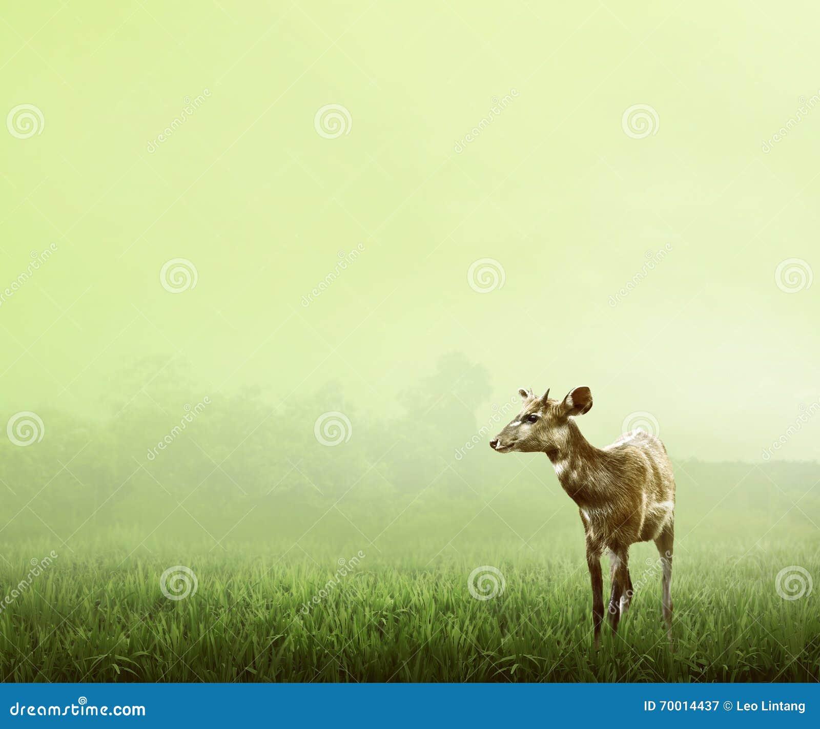 deer single women Discover single women in red deer online at interracial dating central interested in seeking good looking women somewhere in red deer meeting women in red deer has never been easier.