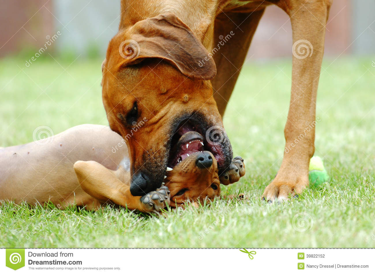 A Dog S Mouth Is Clean Video
