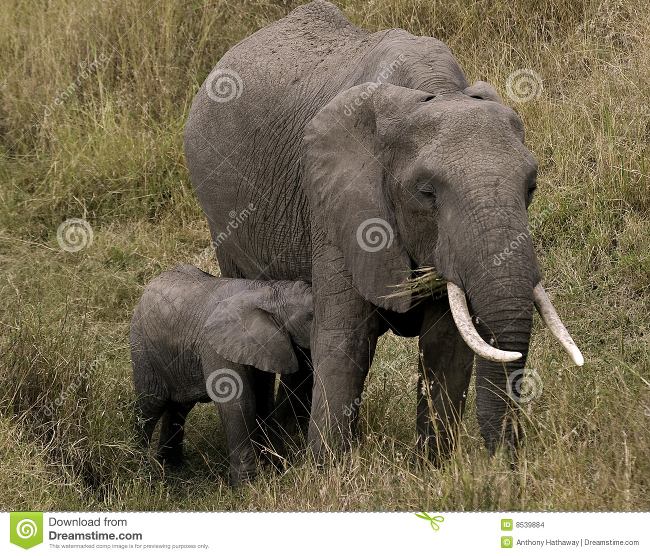 Amateur woman with elephant pussy