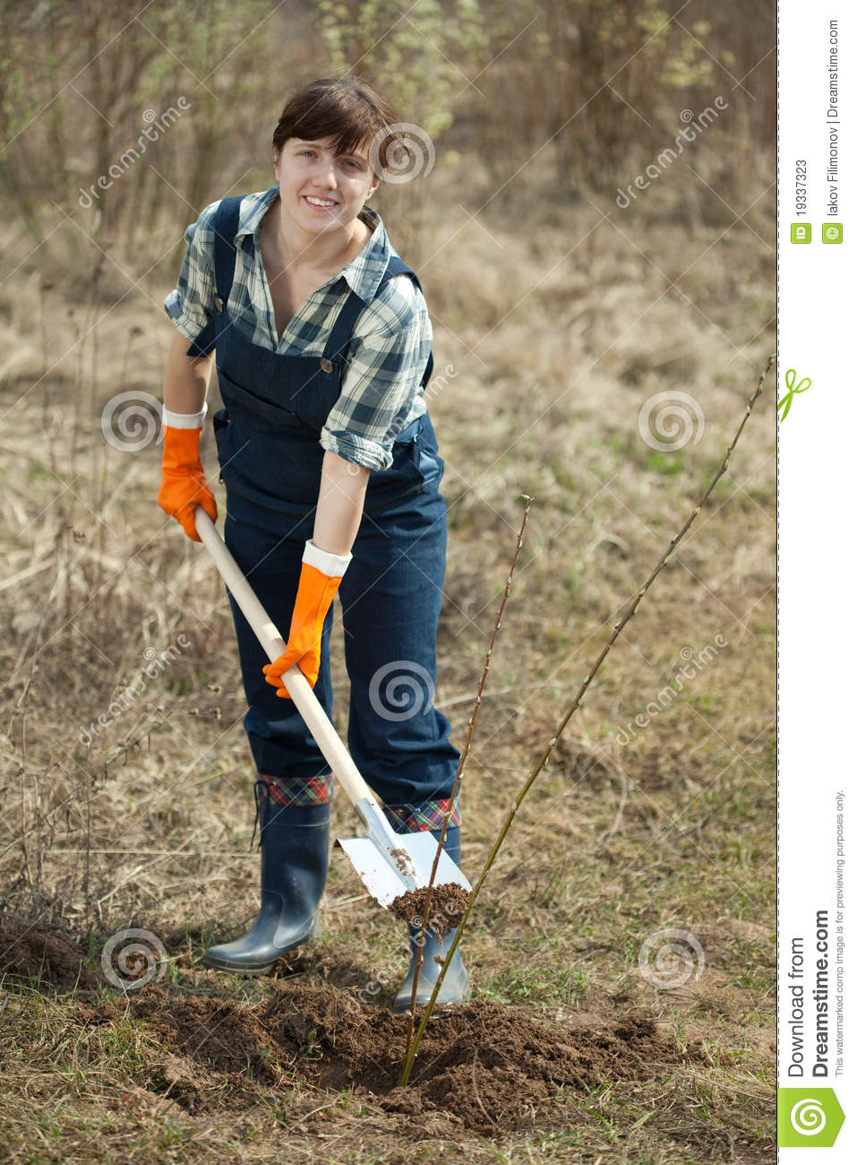 Female Farmer Planting Shrubbery Stock Photos Image
