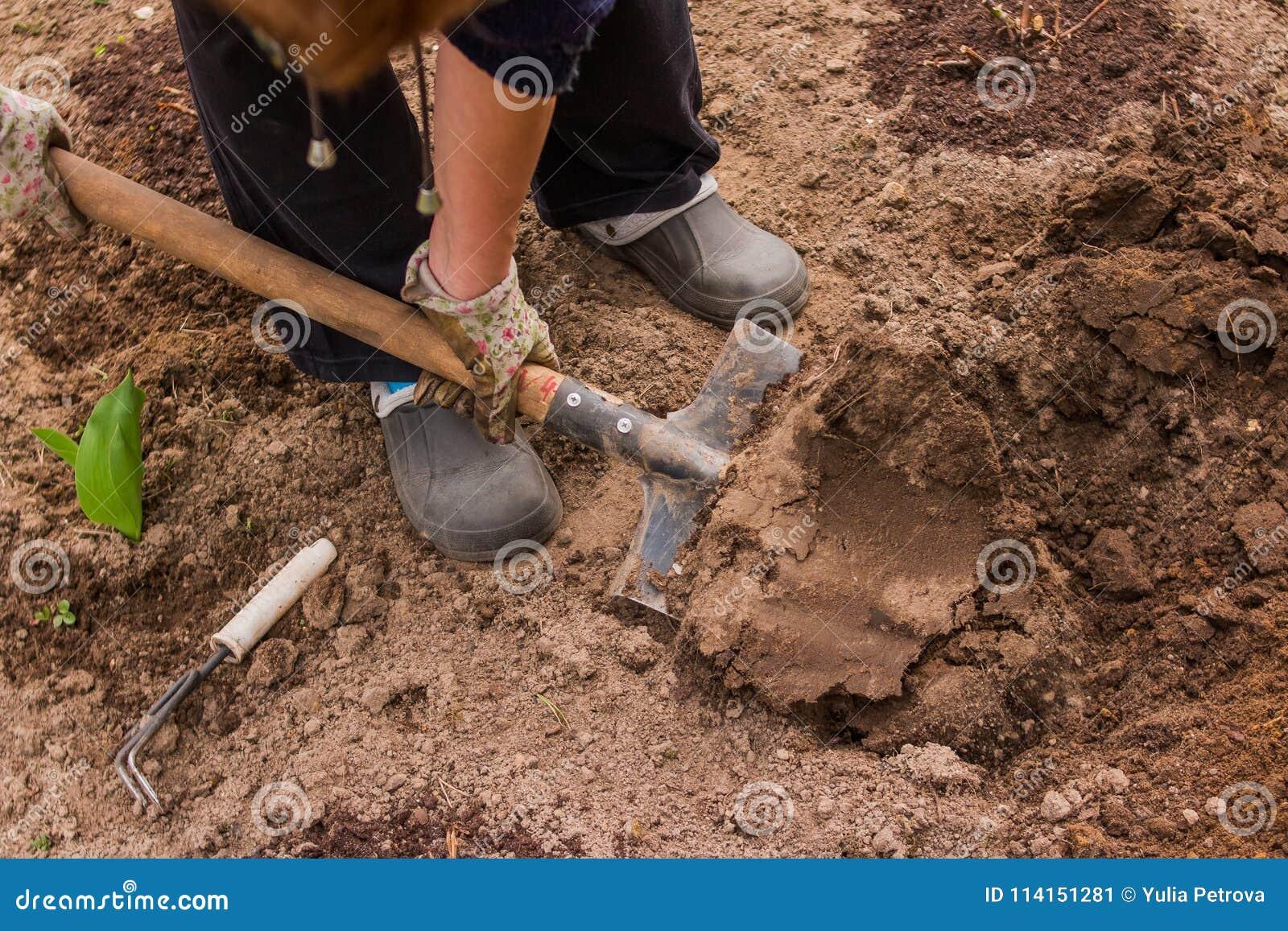 Female Farmer In Rubber Boots Didgging In The Garden.Gardener ...