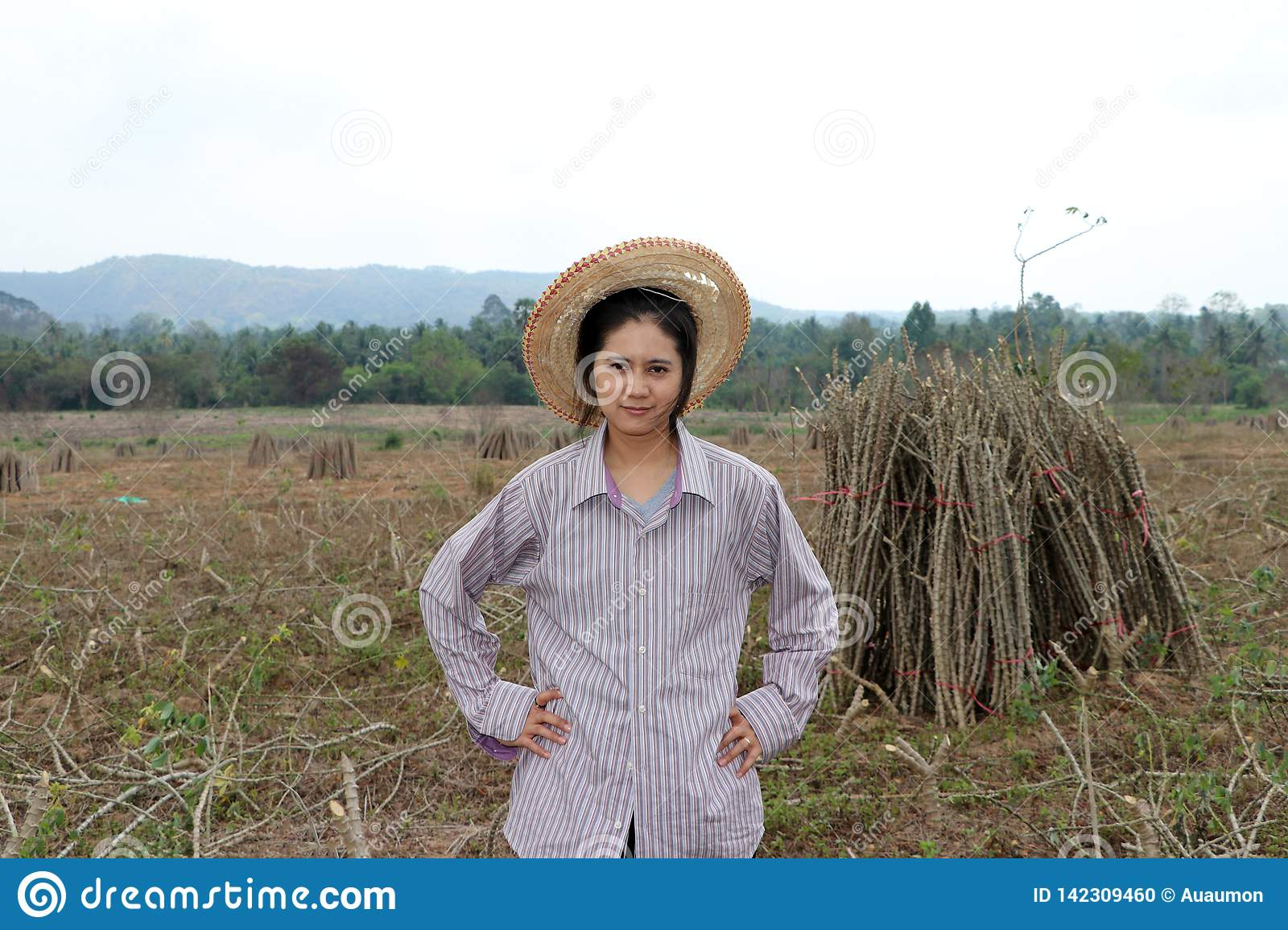 Female farmer standing with akimbo and the limb of tapioca plant that cut the stack together in the farm