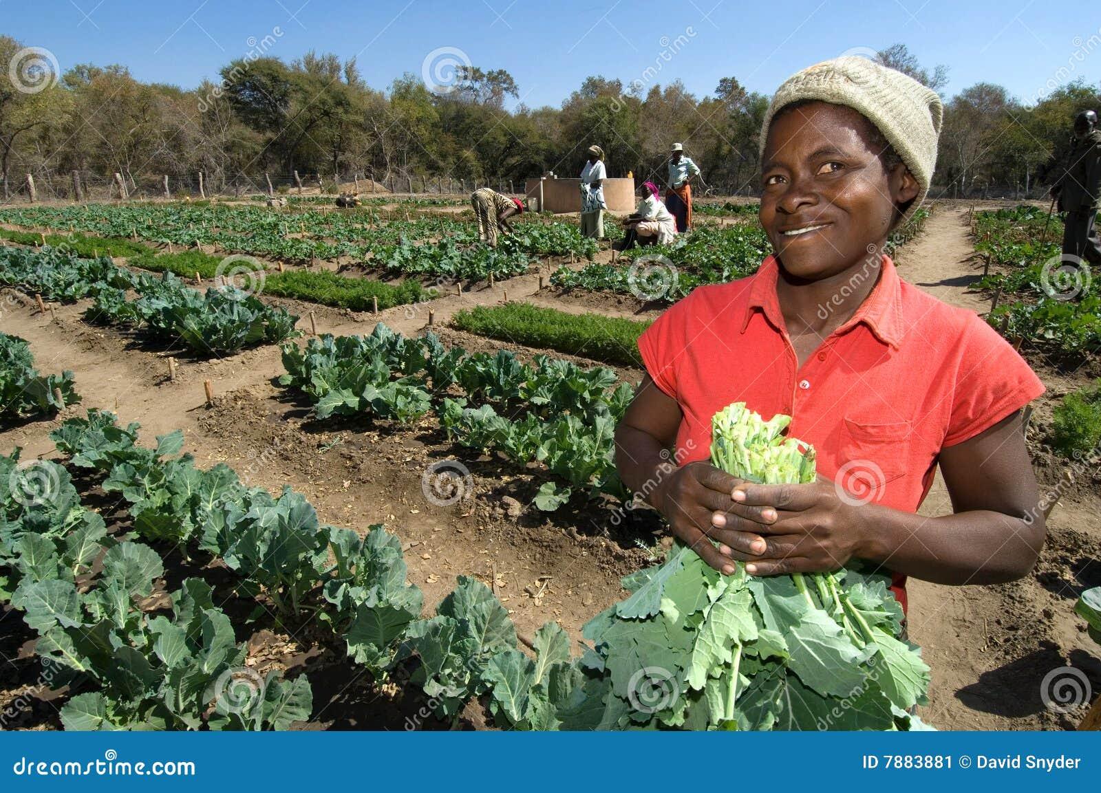 Female Farmer in Zimbabwe