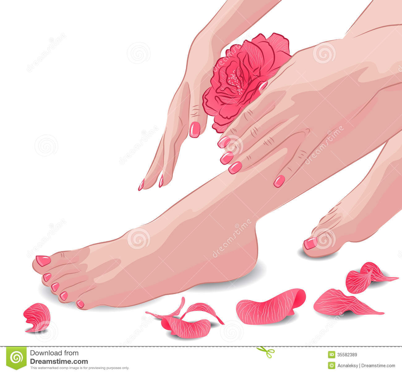 Female Feet And Hands With Pink Rose And Petals Stock
