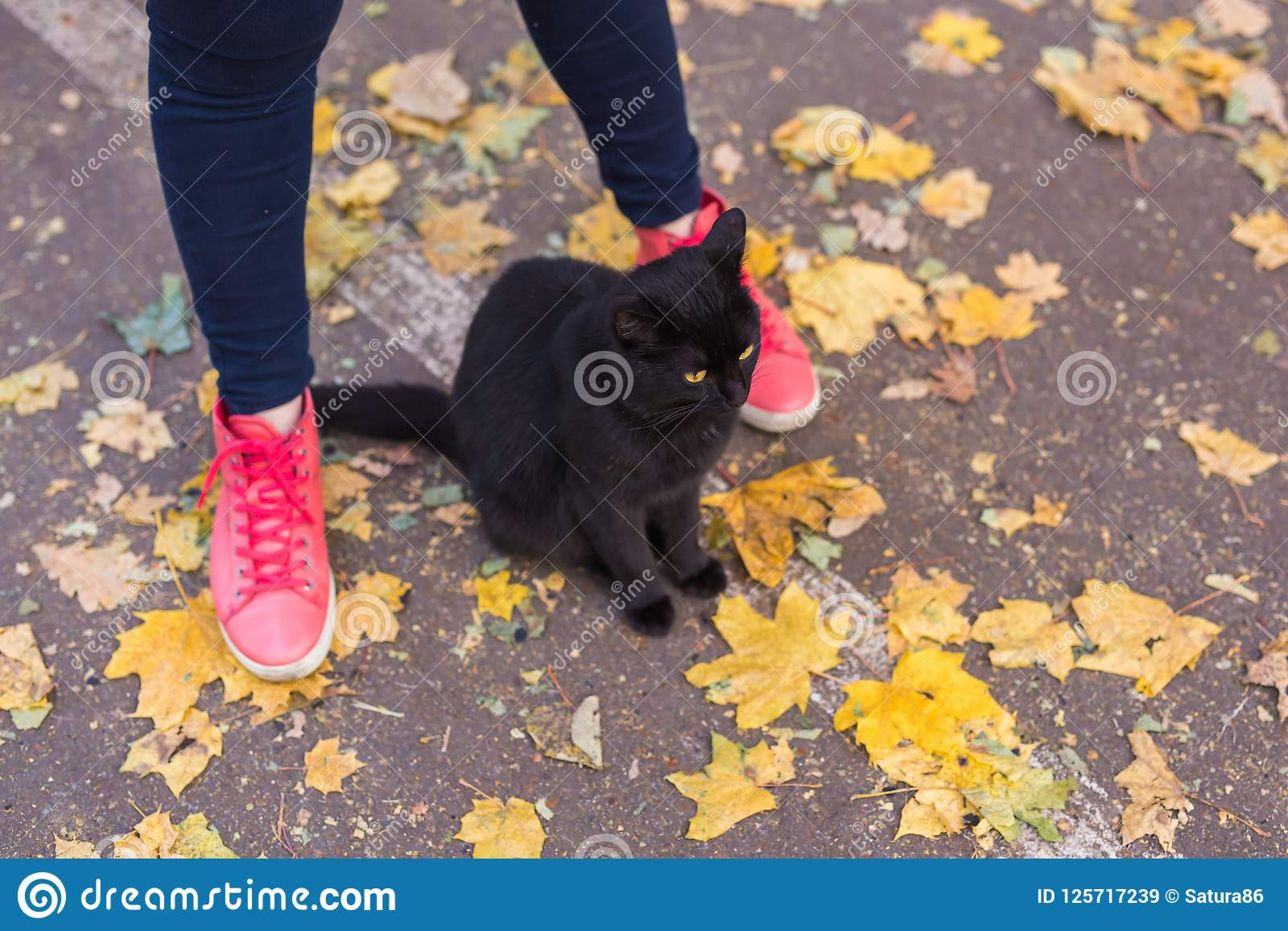 Female Feet In Pink Sneakers And Black Cat In Autumn Nature Stock ... 7b78d18ea
