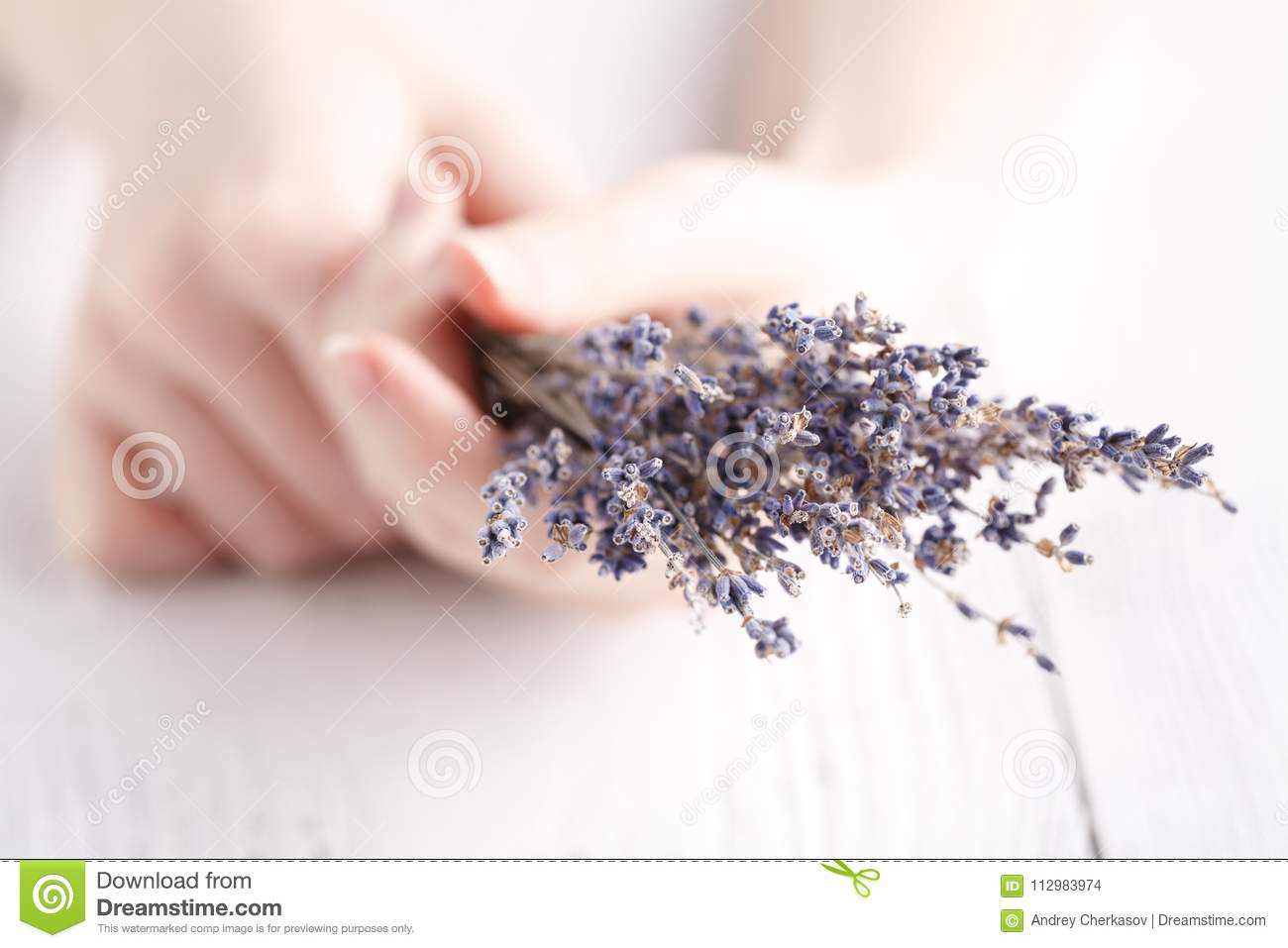Female give bouquet of lavender in hands