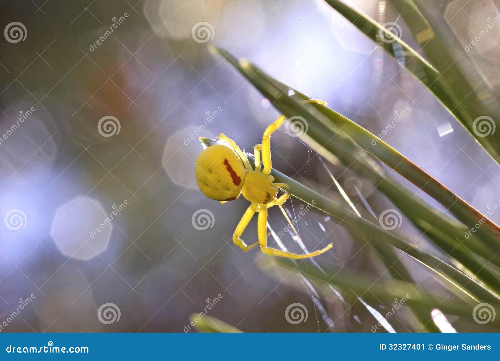 Female Goldenrod Crab Spider Stock Image - Image: 32327401