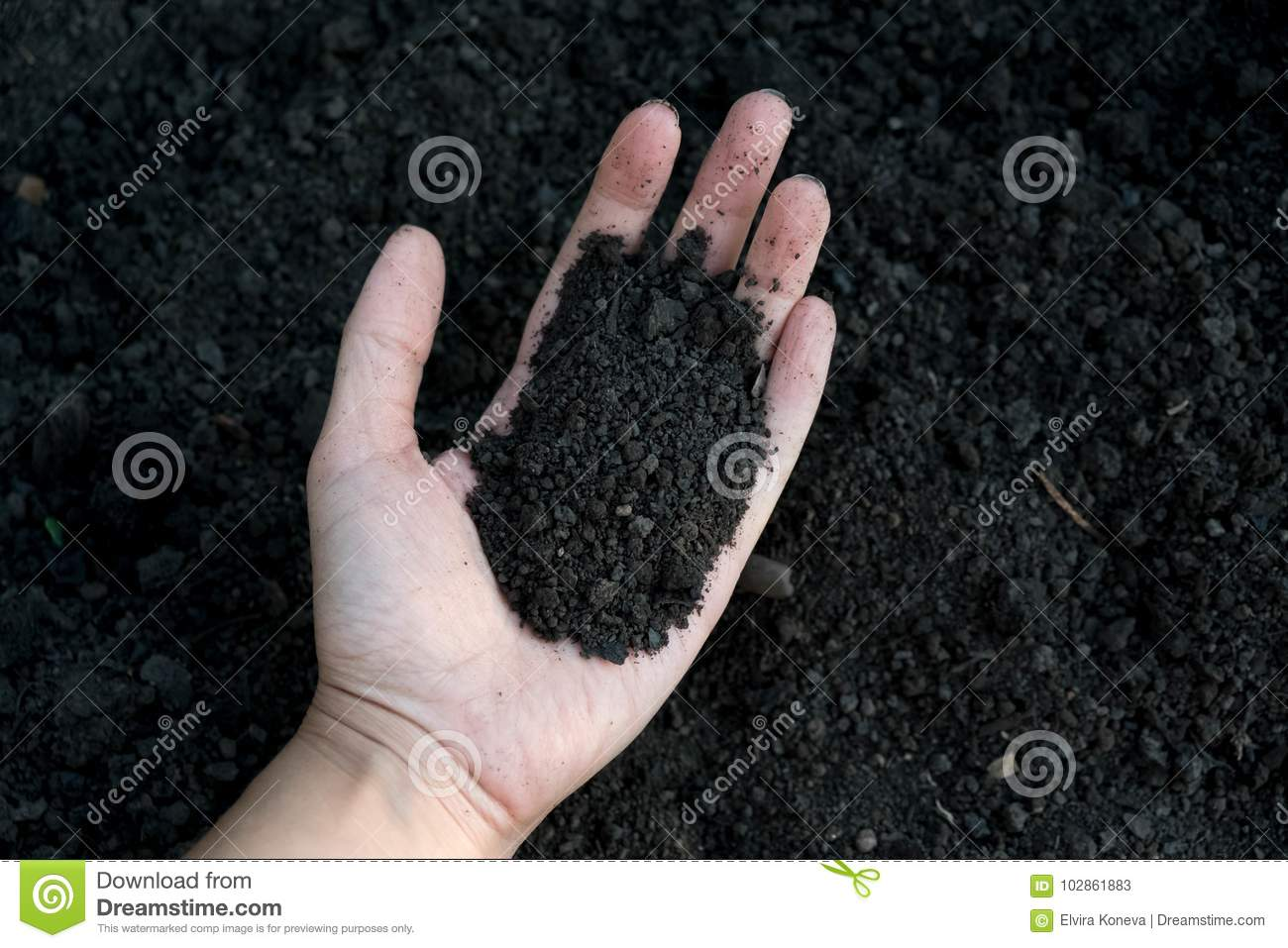 Female hand holding a handful of rich fertile soil that has been newly dug over or tilled in a concept of conservation of nature a