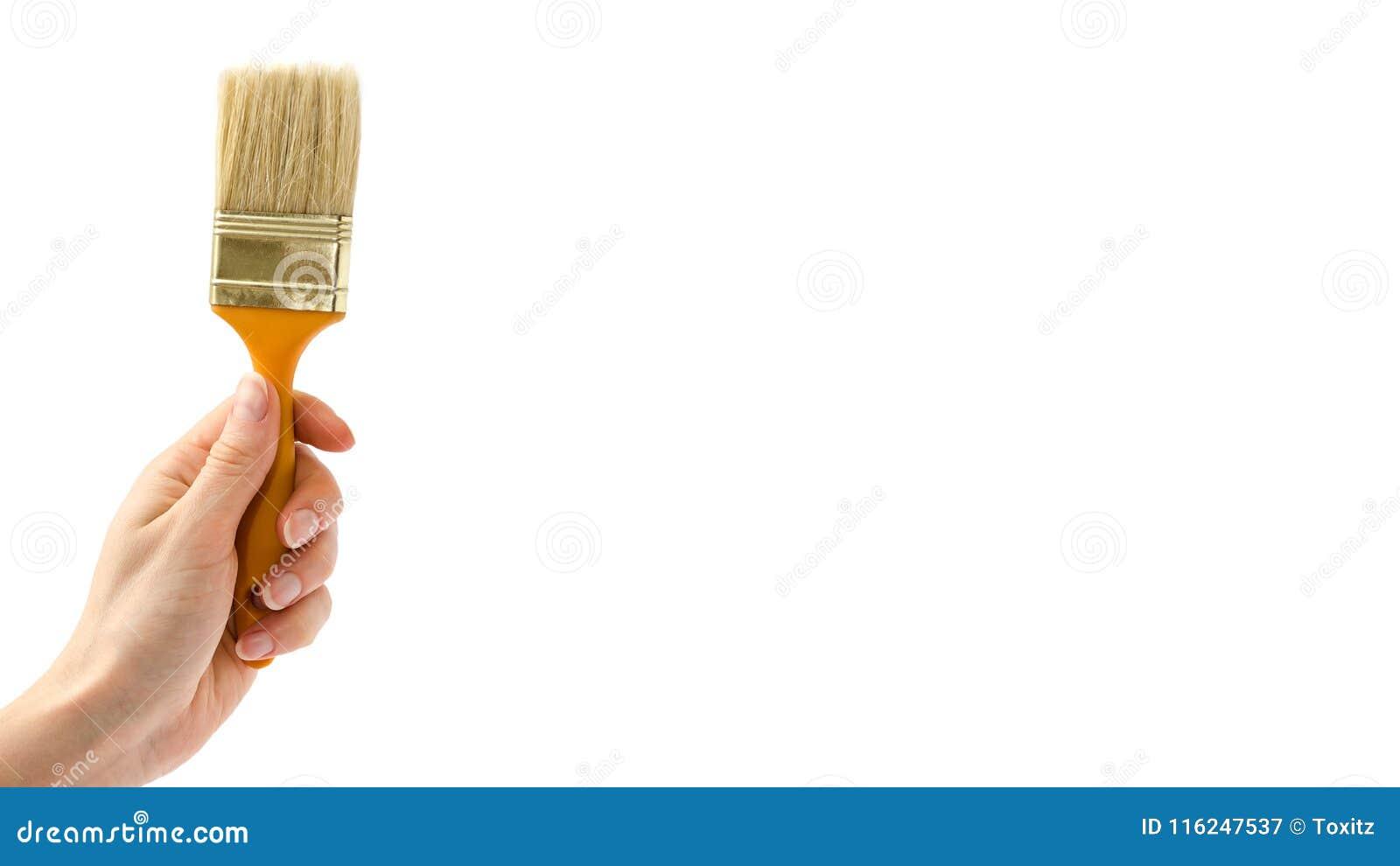 female hand holding paintbrush isolated on white background copy