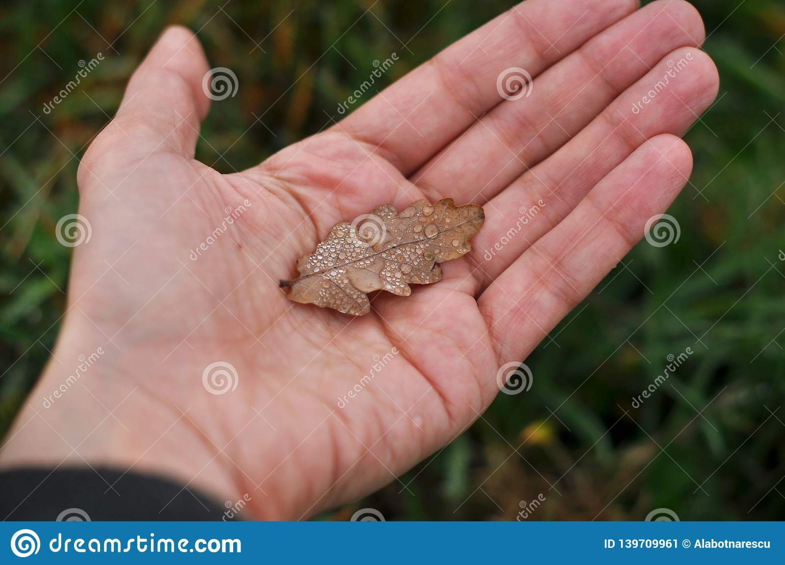A female hand holds a dried oak leaf. Blurred green grass as the background