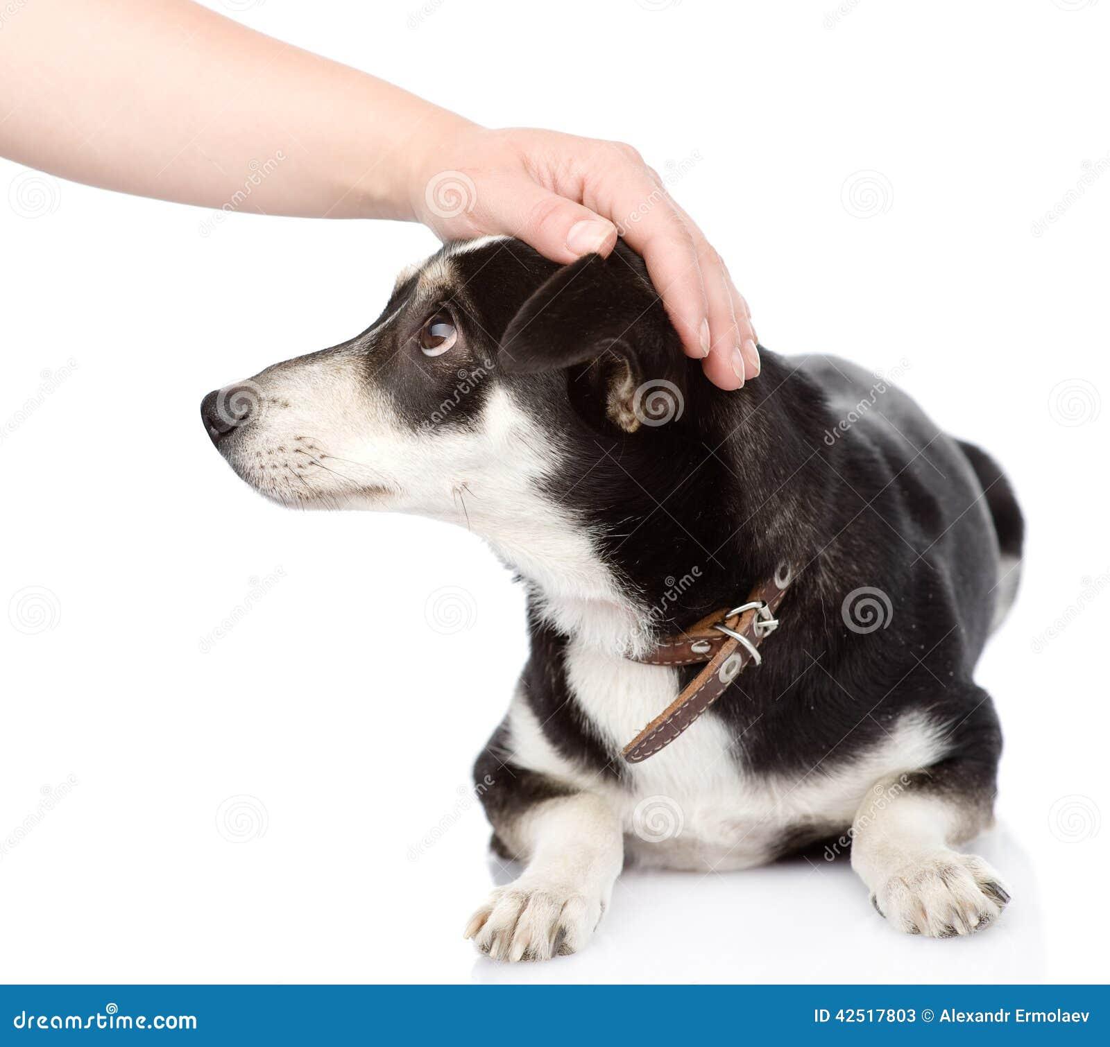 Female Hand Patting Dog Head. On White Background Stock Photo - Image: 42517803