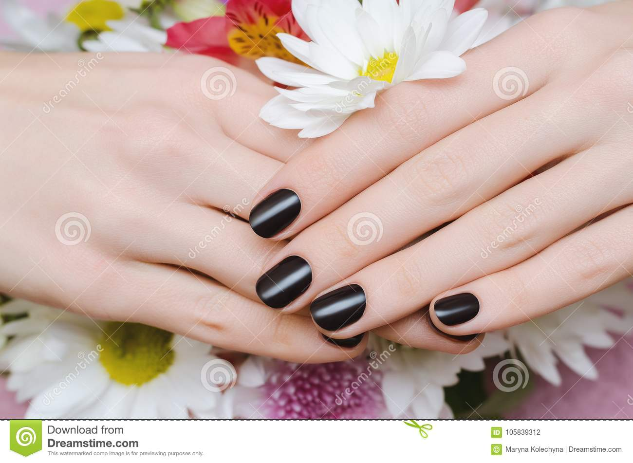 Female Hands With Dark Red Nail Design. Stock Photo - Image of ...
