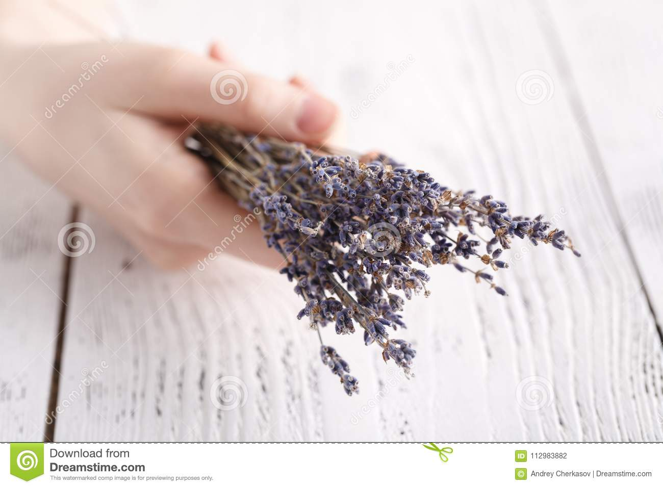 Female hands hold bunch of dry lavender
