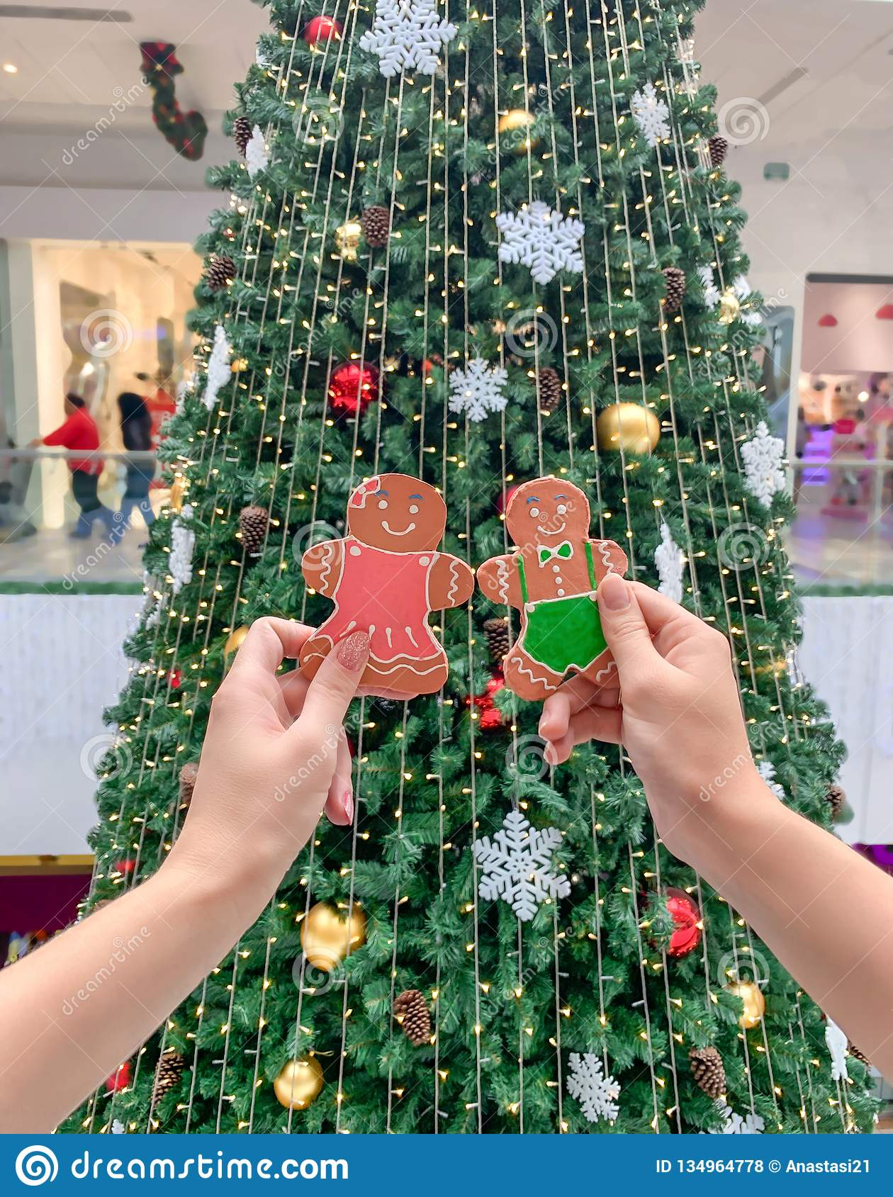 Female hands holding a gingerbread man gingerbread cookie on the background of the Christmas tree