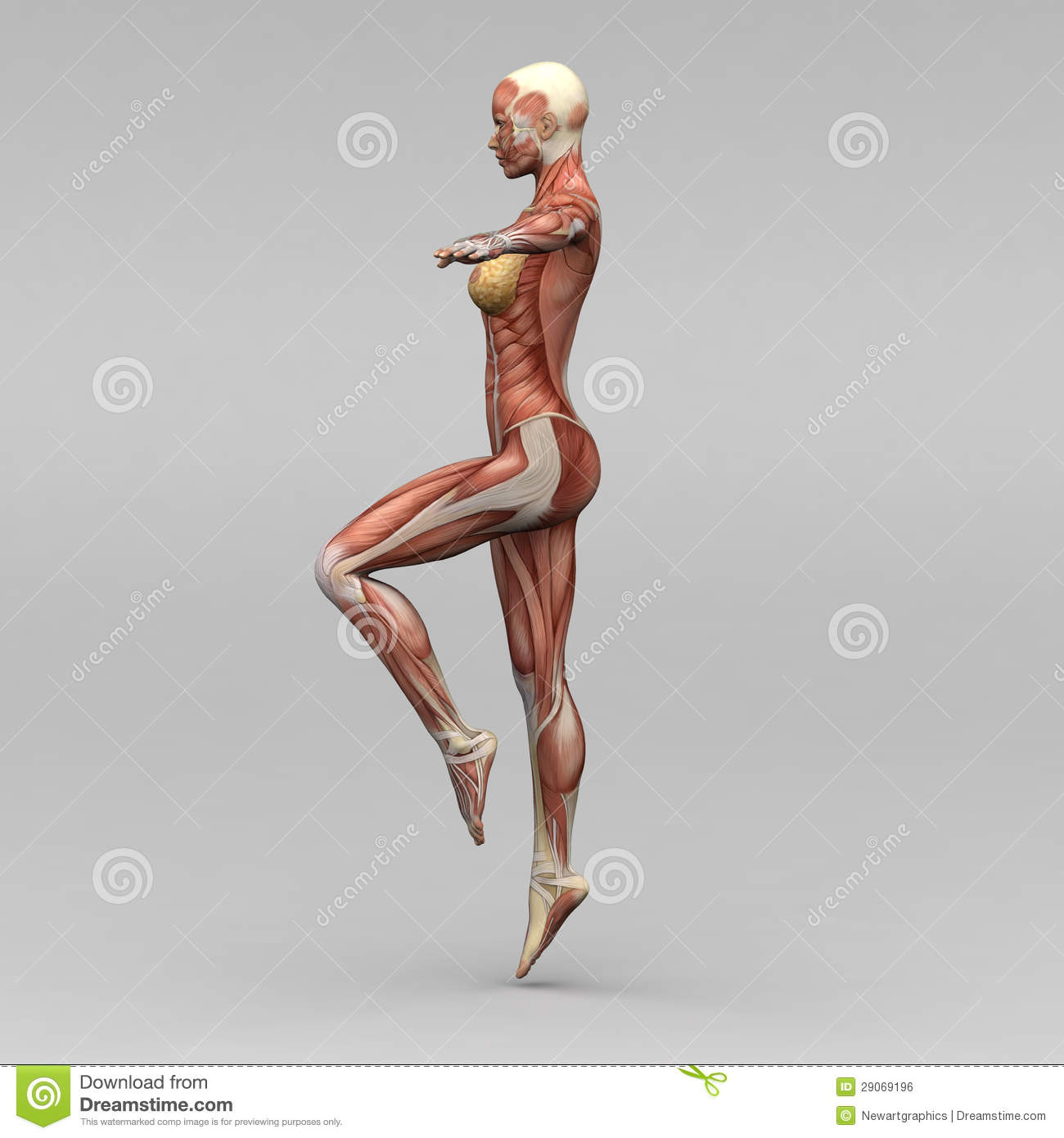 Female anatomy stock photos, liveperson.net/hc