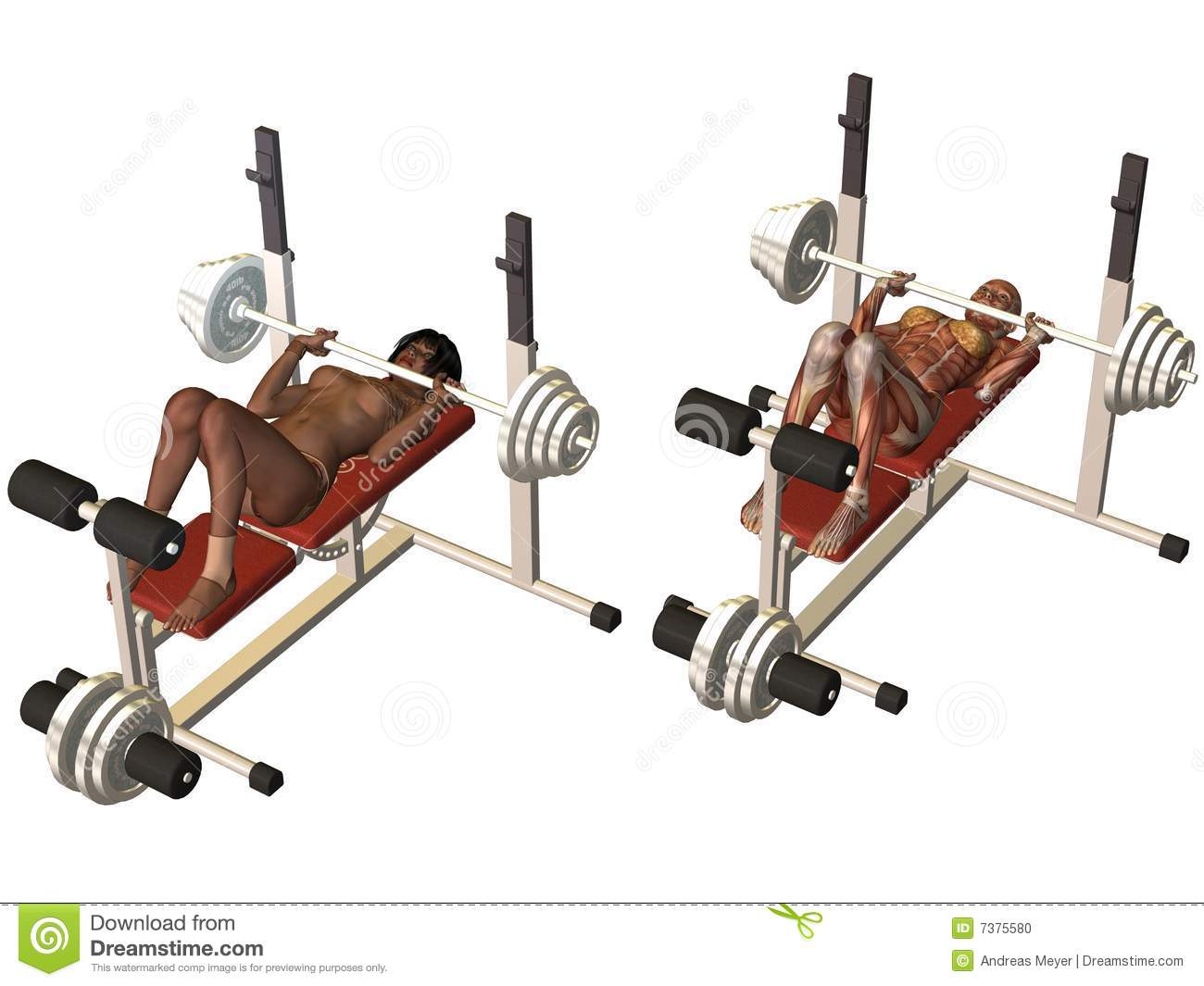 Female Human Body - Power Bench Stock Photo - Image: 7375580