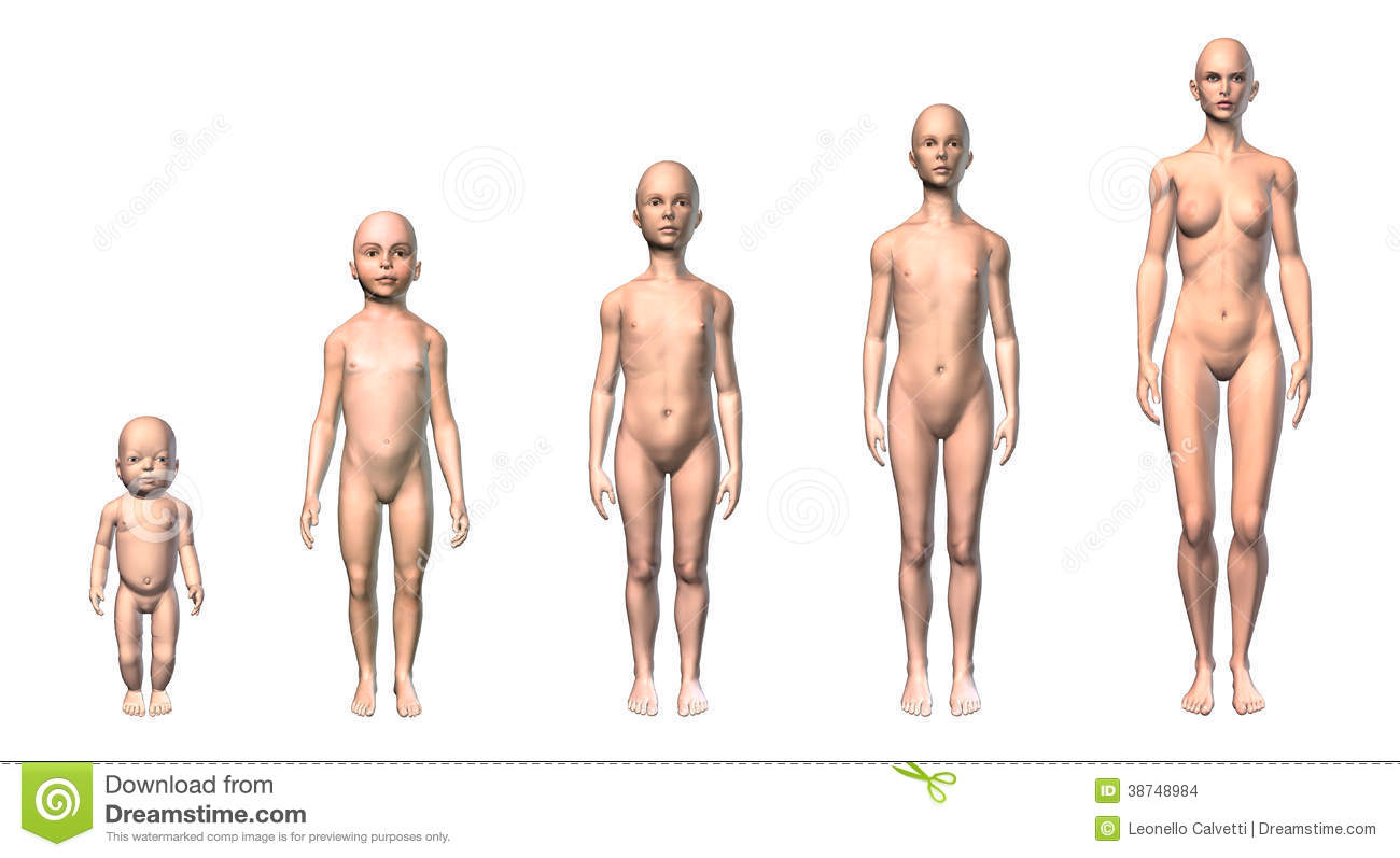 Female Human Body Scheme Of Different Ages Stages Stock