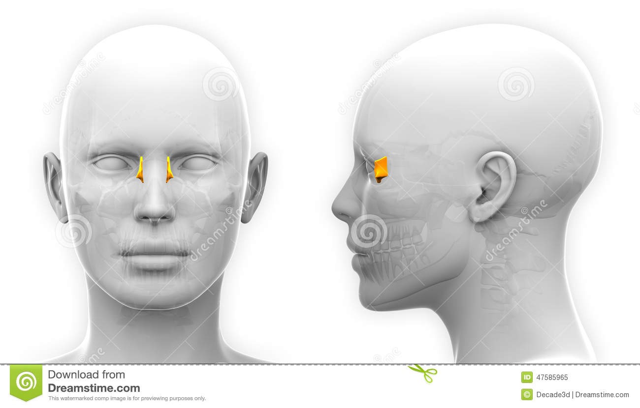 female lacrimal skull anatomy isolated on white stock clipart hearing aid clipart hearing test
