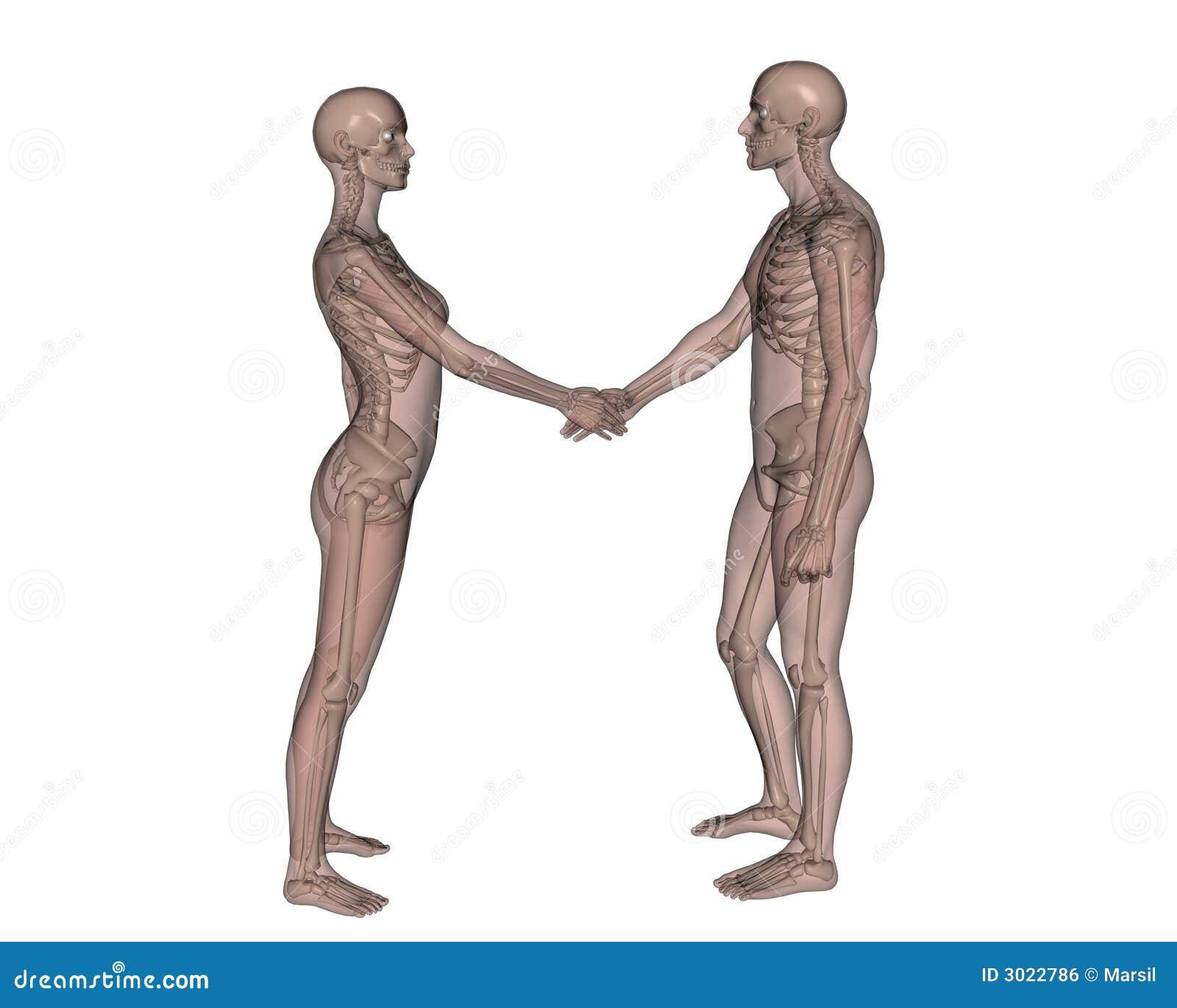 Female and Male skeleton stock illustration. Illustration of friends ...