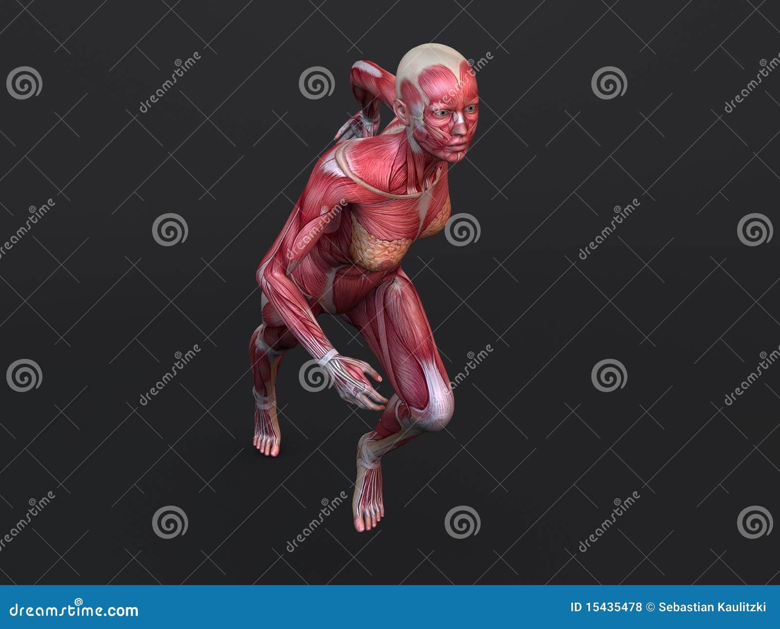 Gemütlich Anatomie 3d Modell Kostenlos Ideen - Anatomie Von ...