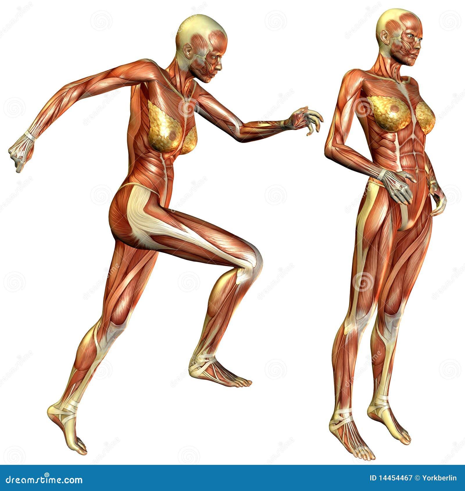 Swimwear Study The Nude Female Anatomy Jpg