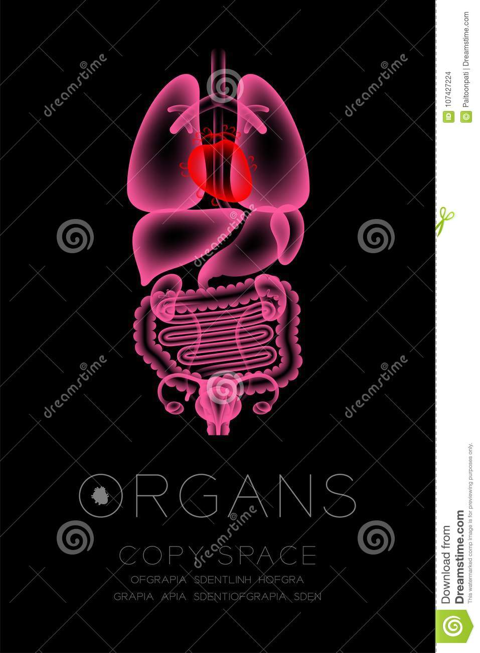 Female Organs X Ray Set Heart Infection Concept Idea Red Color Organ