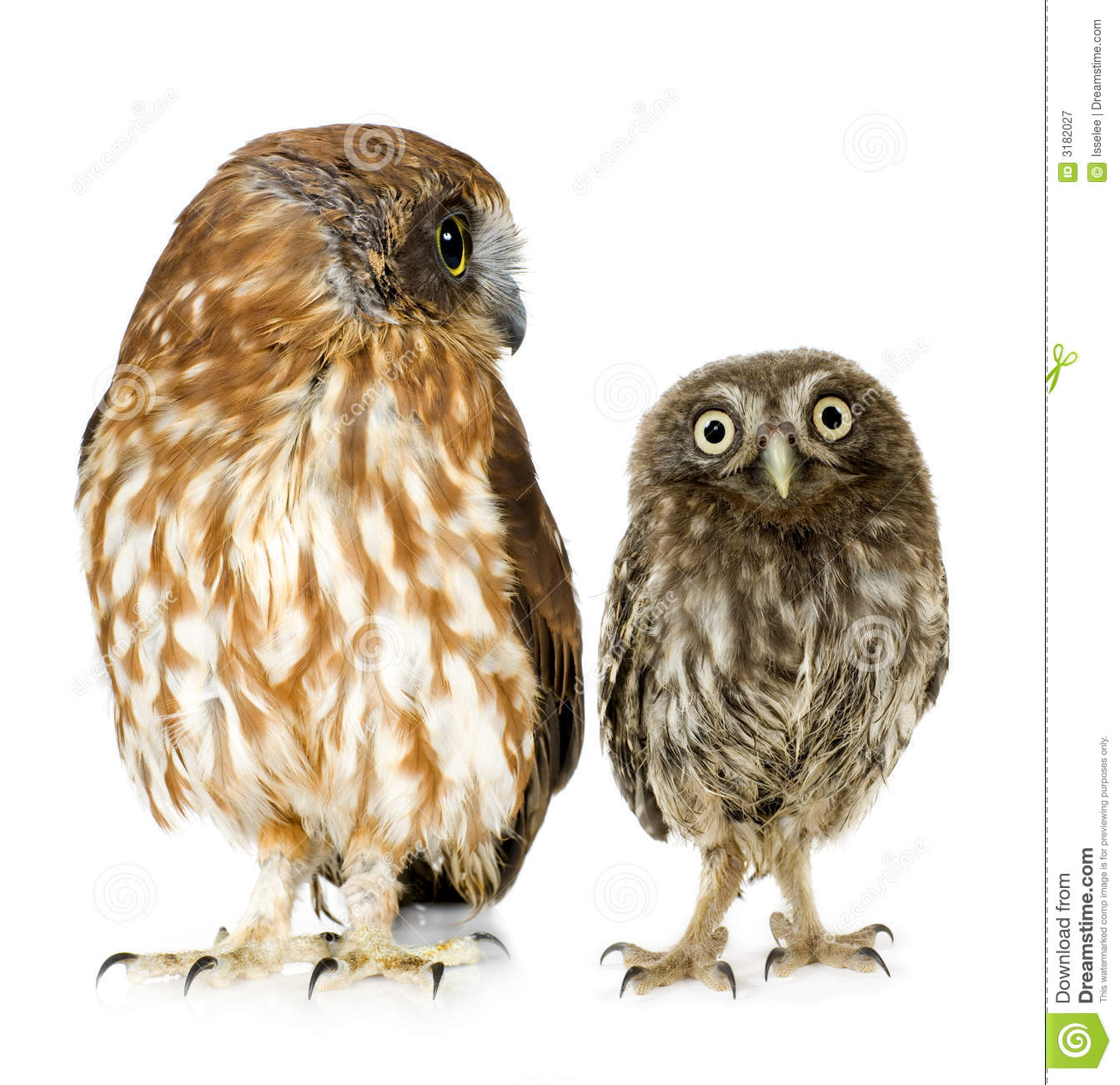 Baby Barred Owl Related Keywords & Suggestions, Long tail keywords