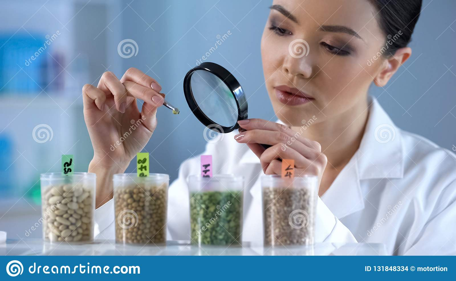 Female scientist looking at pea grain through magnifying glass, food inspection