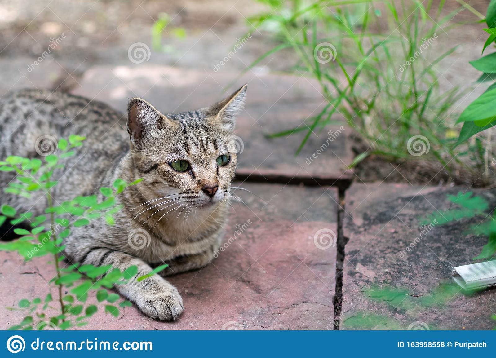 A Female Stray Cat Sitting In The Backyard Stock Photo ...