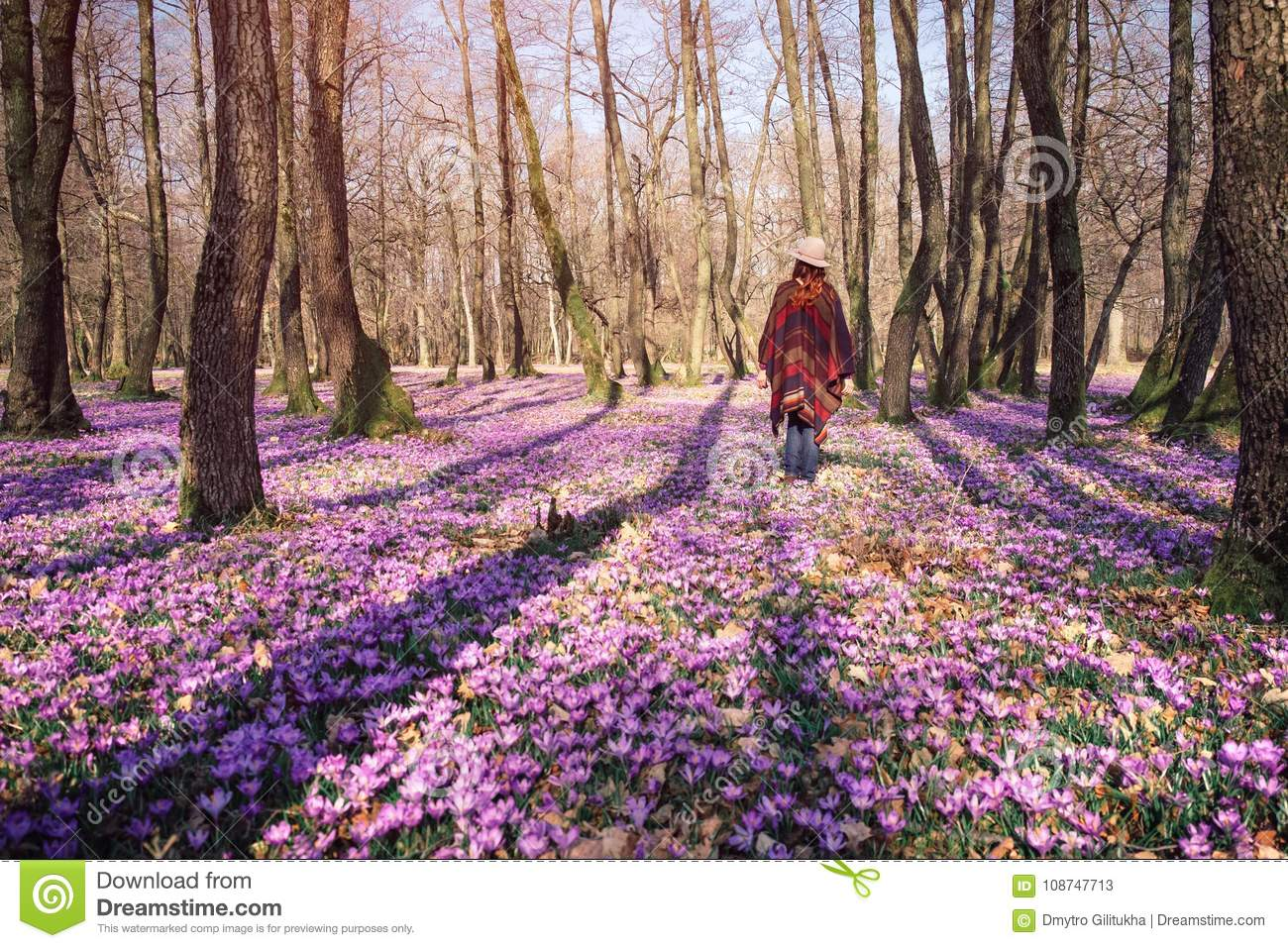 Blooming nature, crocuses, young traveler