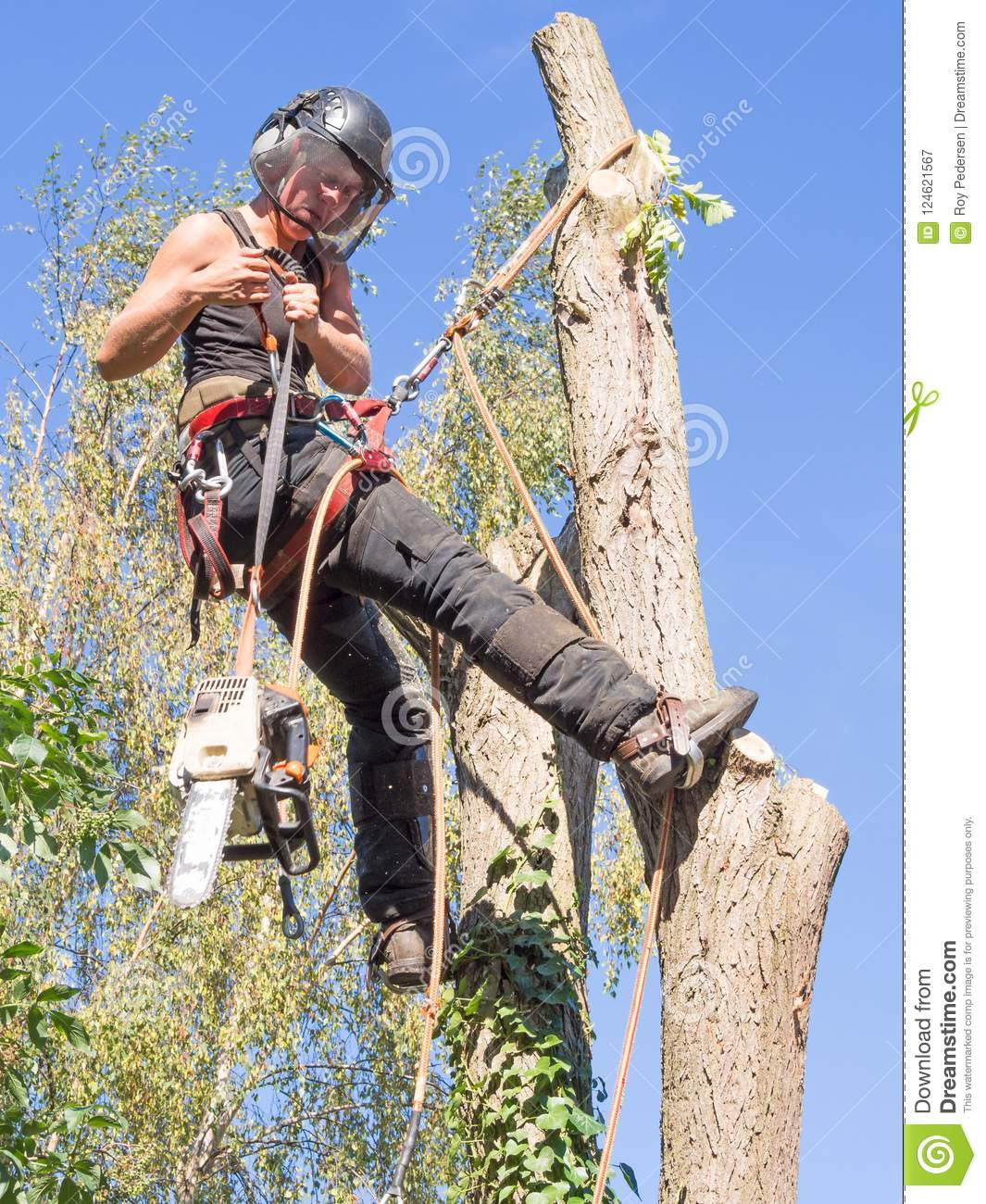 Using a chainsaw up a tree