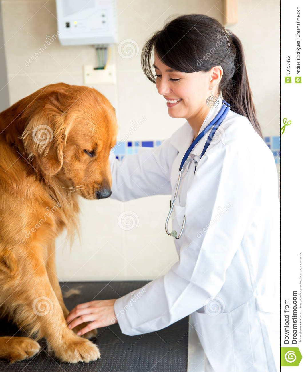 a discussion on the joy and pains of dog ownership Dogs are family 1,498,468 likes 39,218 talking dogs suffer extreme pain if hip dysplasia is left after receiving a call from the dog's owner.