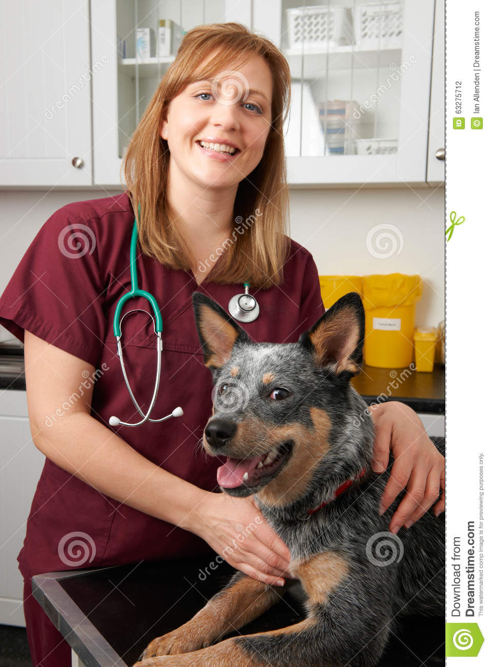 Female Vet Examining Dog In Surgery