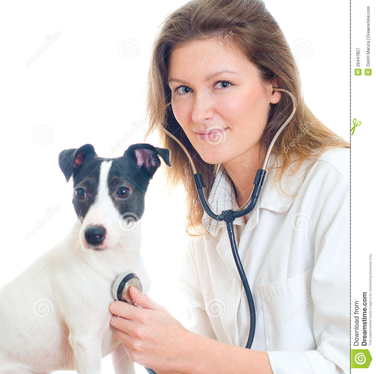 Watch How to Care for a Jack Russell video