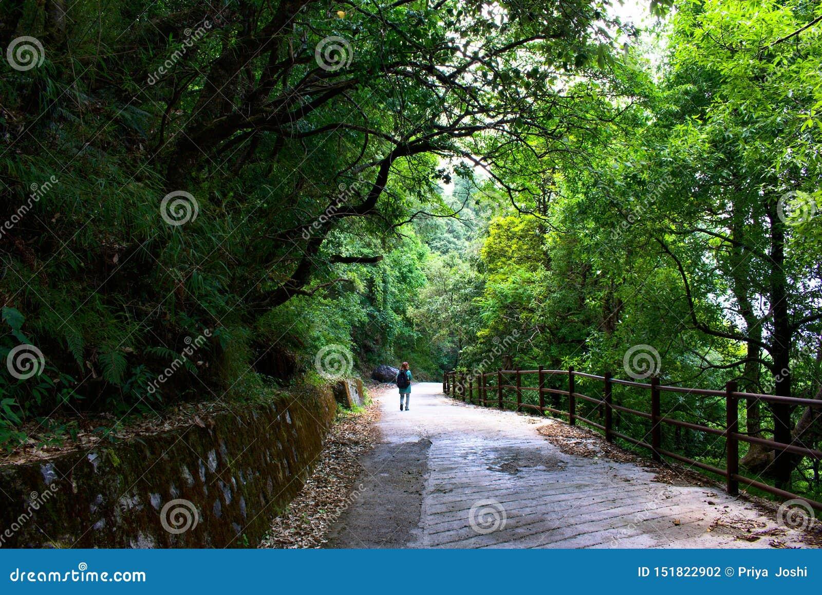 Femme avec les cheveux rouges marchant par la forêt le long des arbres d un vert de traînée très assez et dans les bois elle est