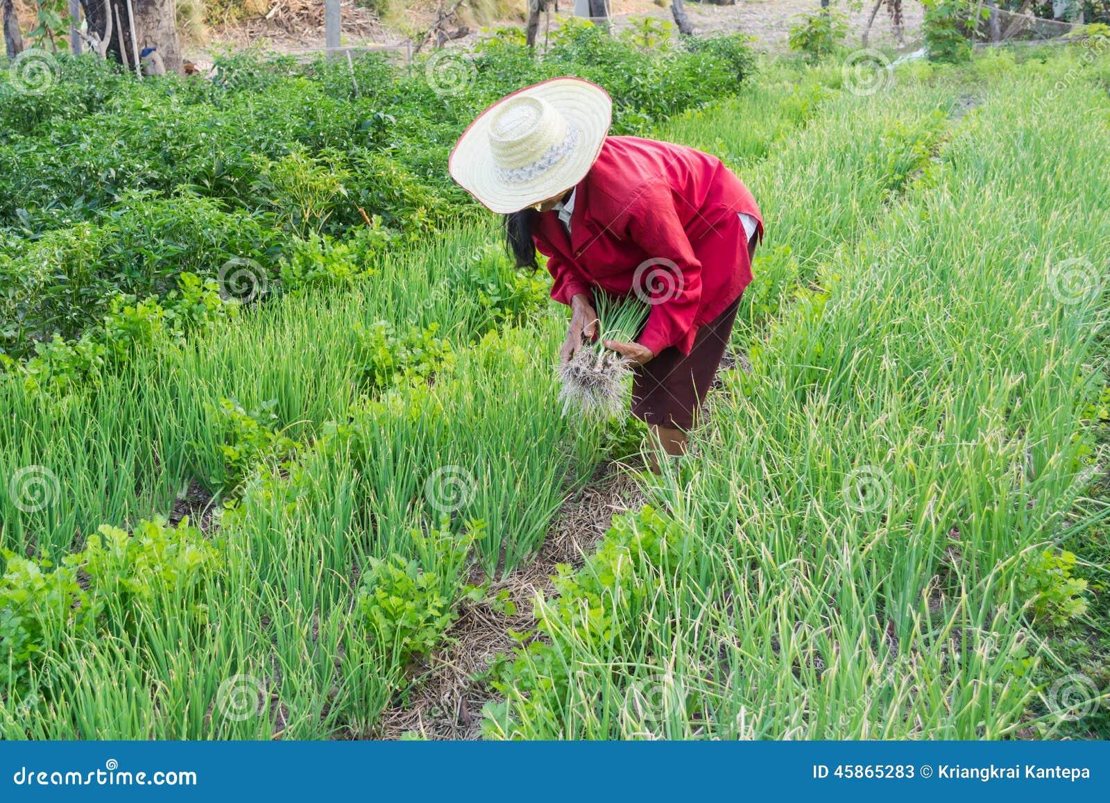 Le Jardin Potager En Janvier femme dans le potager photo stock éditorial. image du