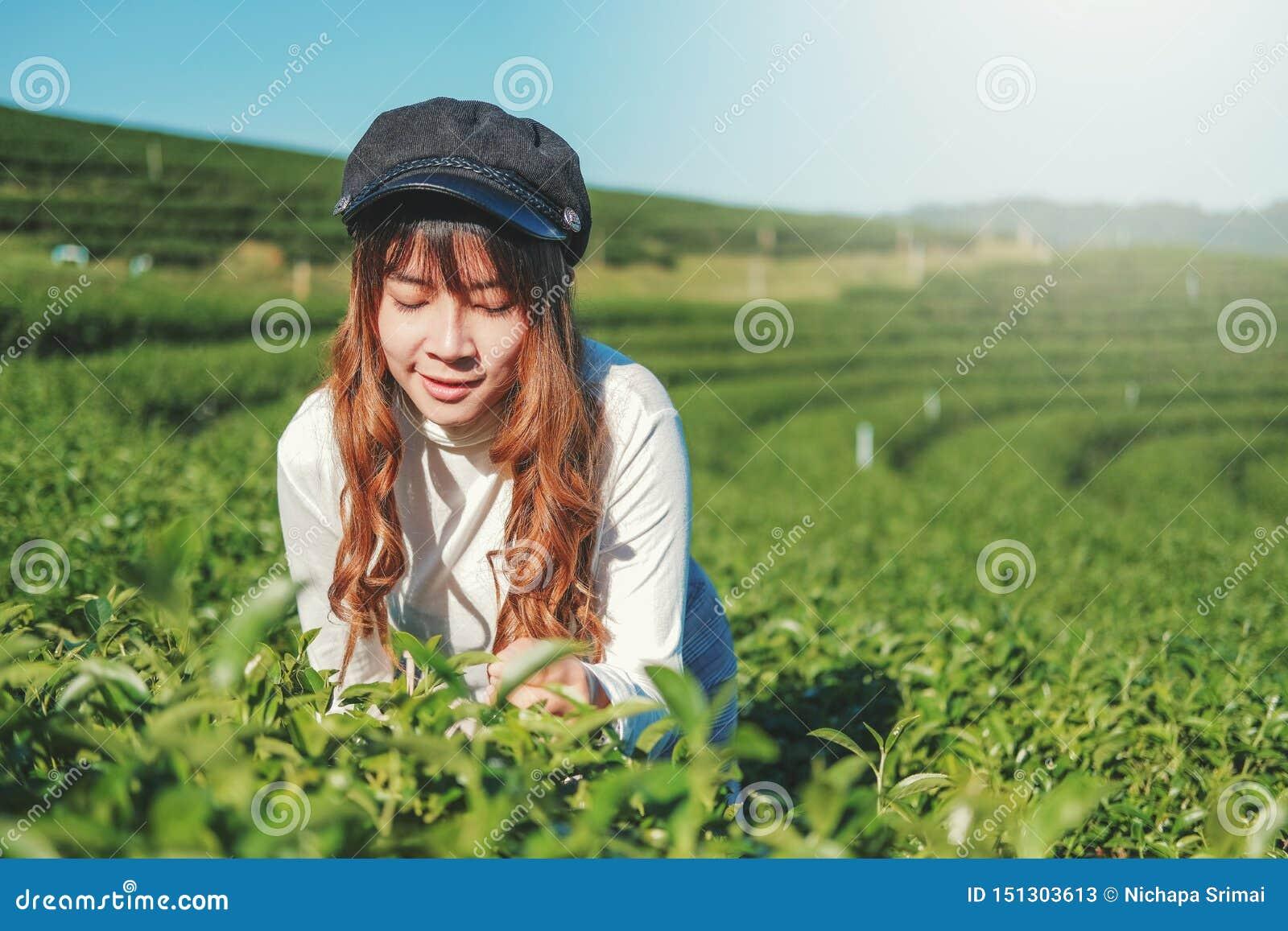 Femme de voyage marchant dans l usine de thé chez Chiang Rai Thaïlande