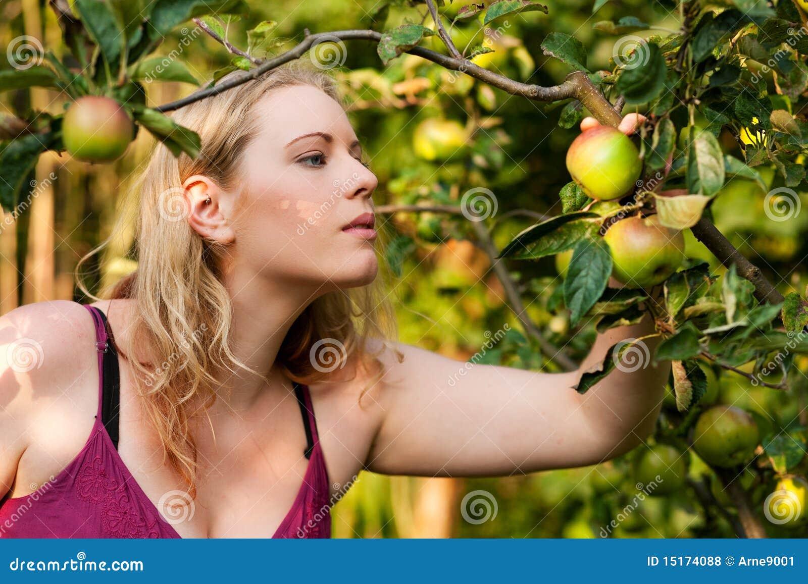 Femme moissonnant des pommes dans le jardin