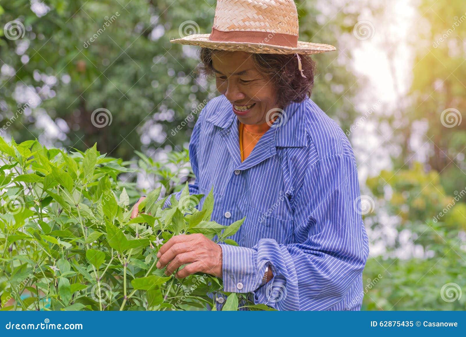 Femme supérieure d agriculteur avec le piment de cueillette du potager