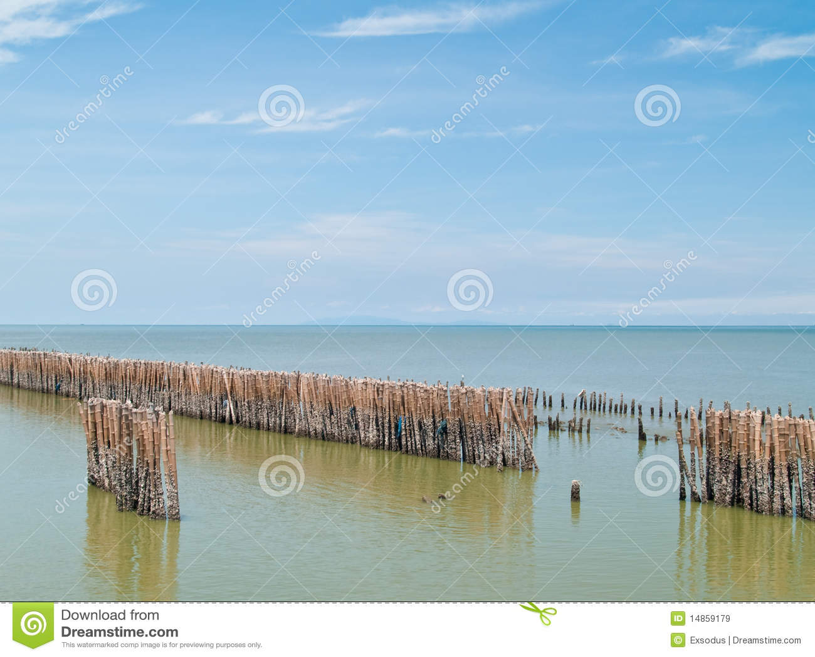 Fence bamboo row