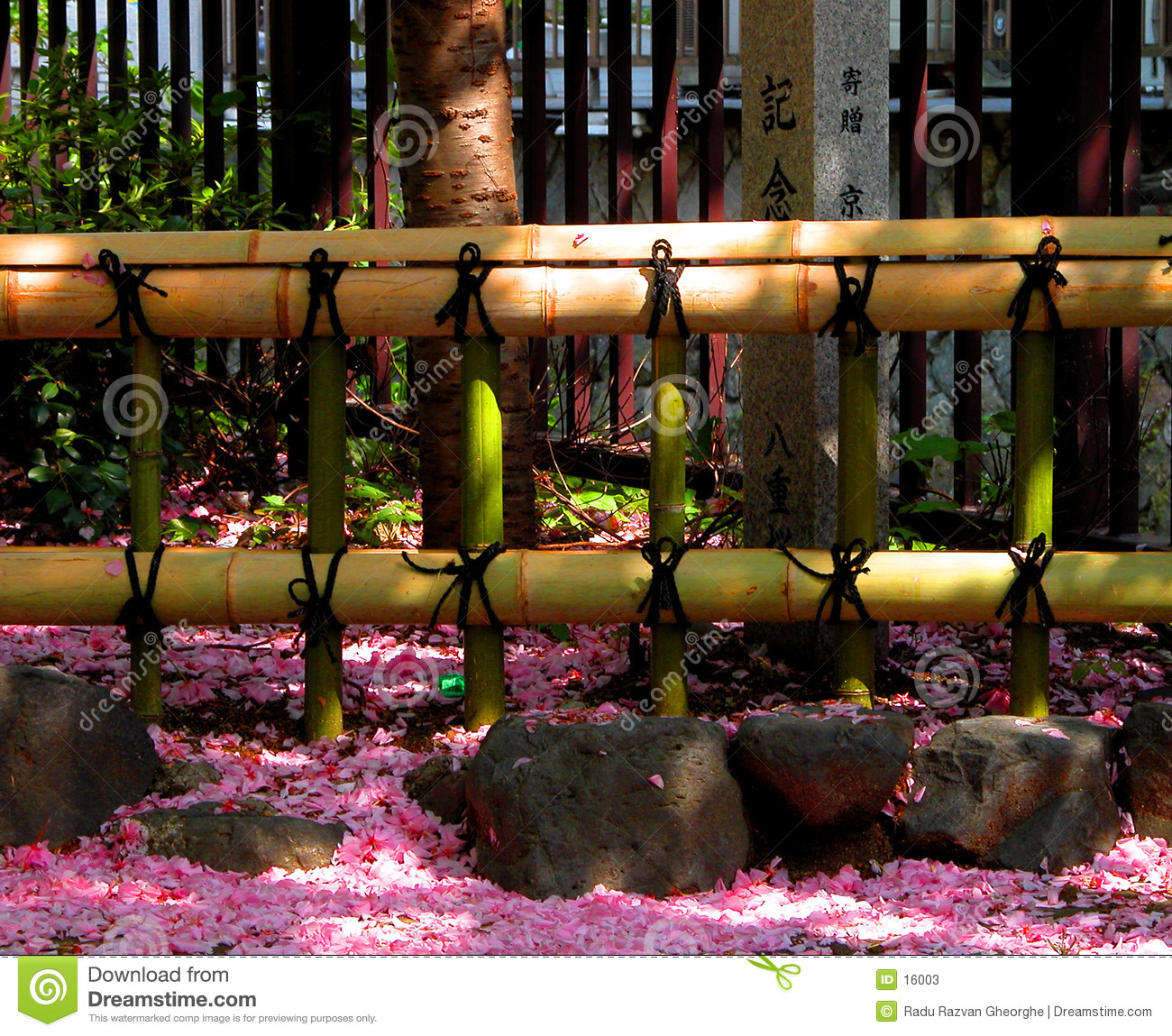 Fence and petals