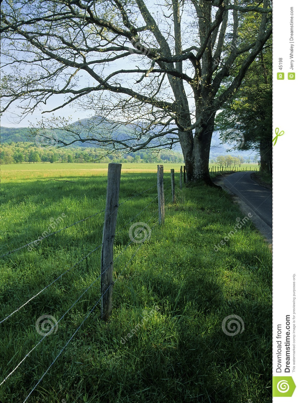 Fence, Tree, Road, Spring