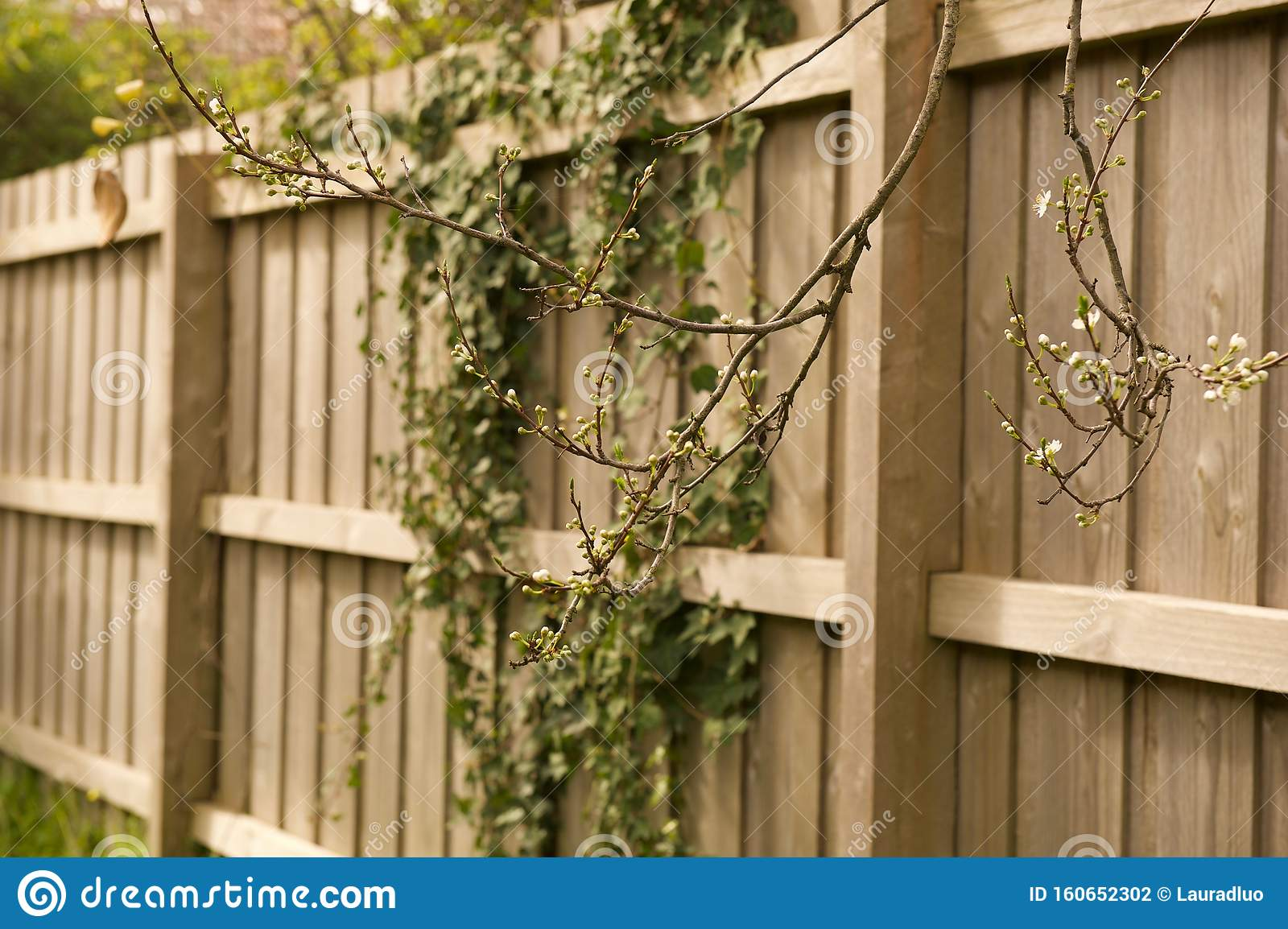 Fence Wallpaper Background With Climbing Vines Stock Photo Image