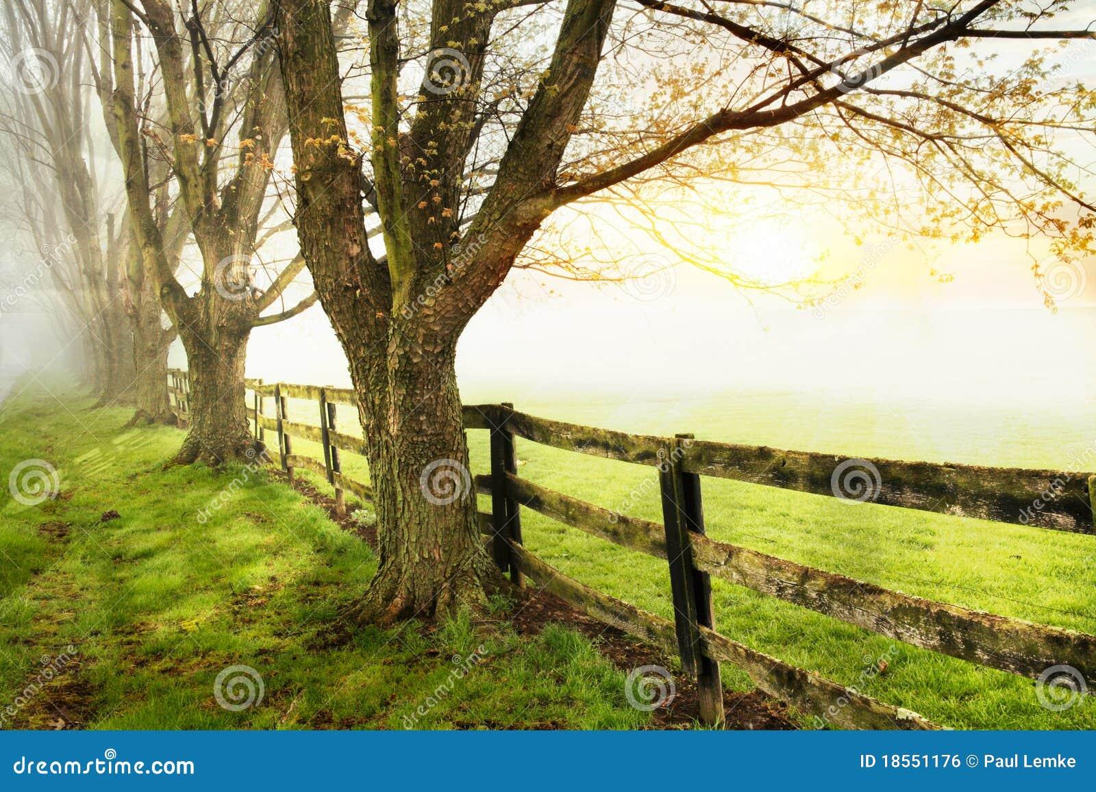 Fenceline e árvores