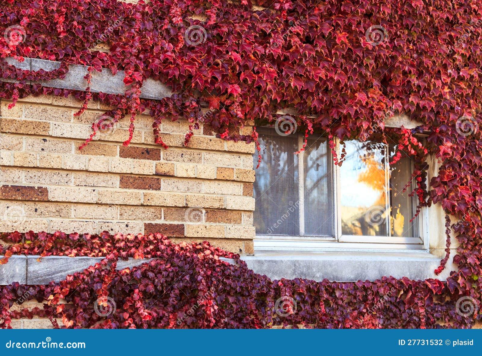 Fenster auf einer Wand abgedeckt mit Trauben