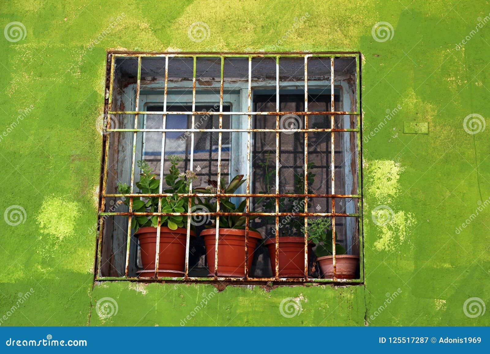 Fenster gestaltet durch eine grüne Wand