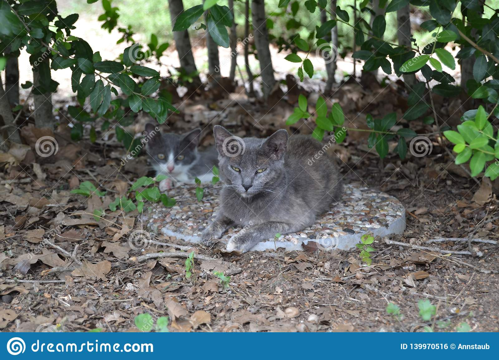 Feral mother cat and her baby
