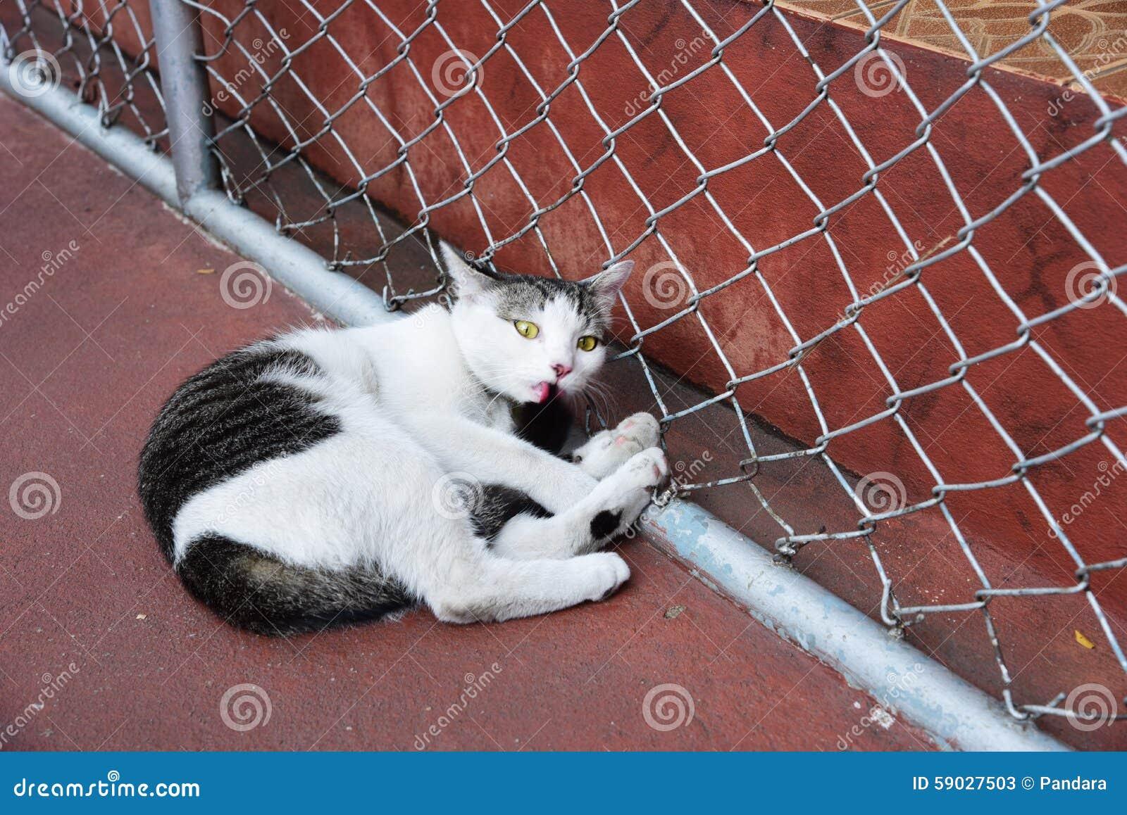 Fermé vers le haut du chat noir et blanc gras se repose sur un plancher