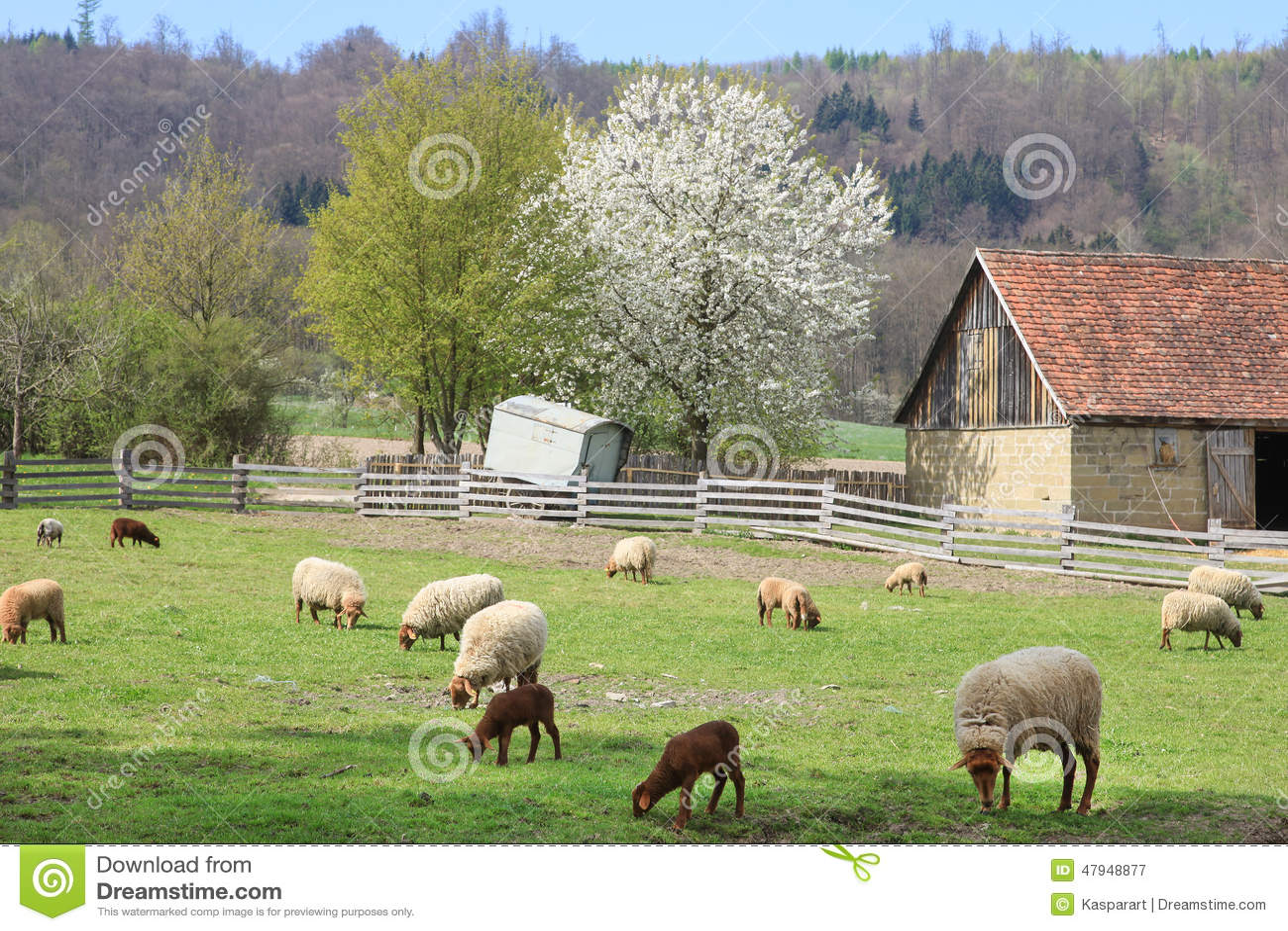 Ferme avec les moutons et la grange photo stock image - Photos de moutons gratuites ...