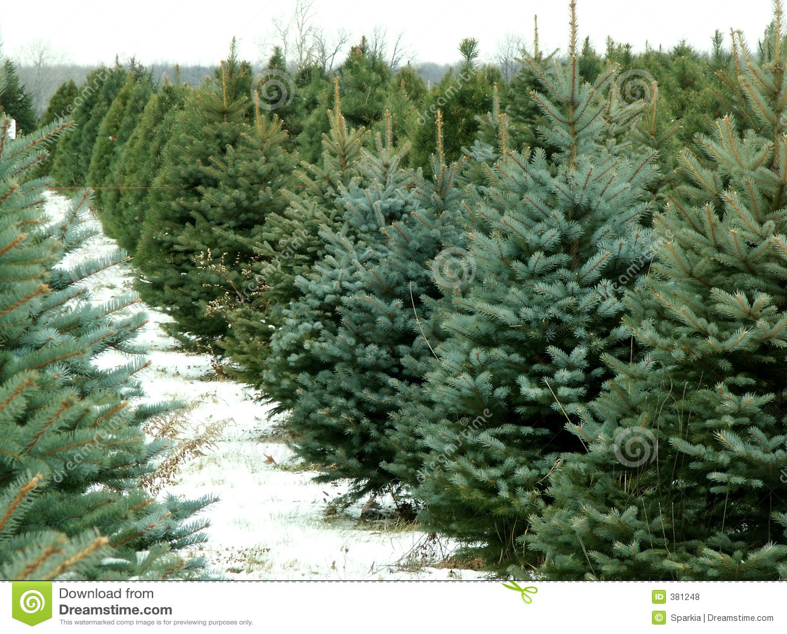 Ferme d arbre de Noël